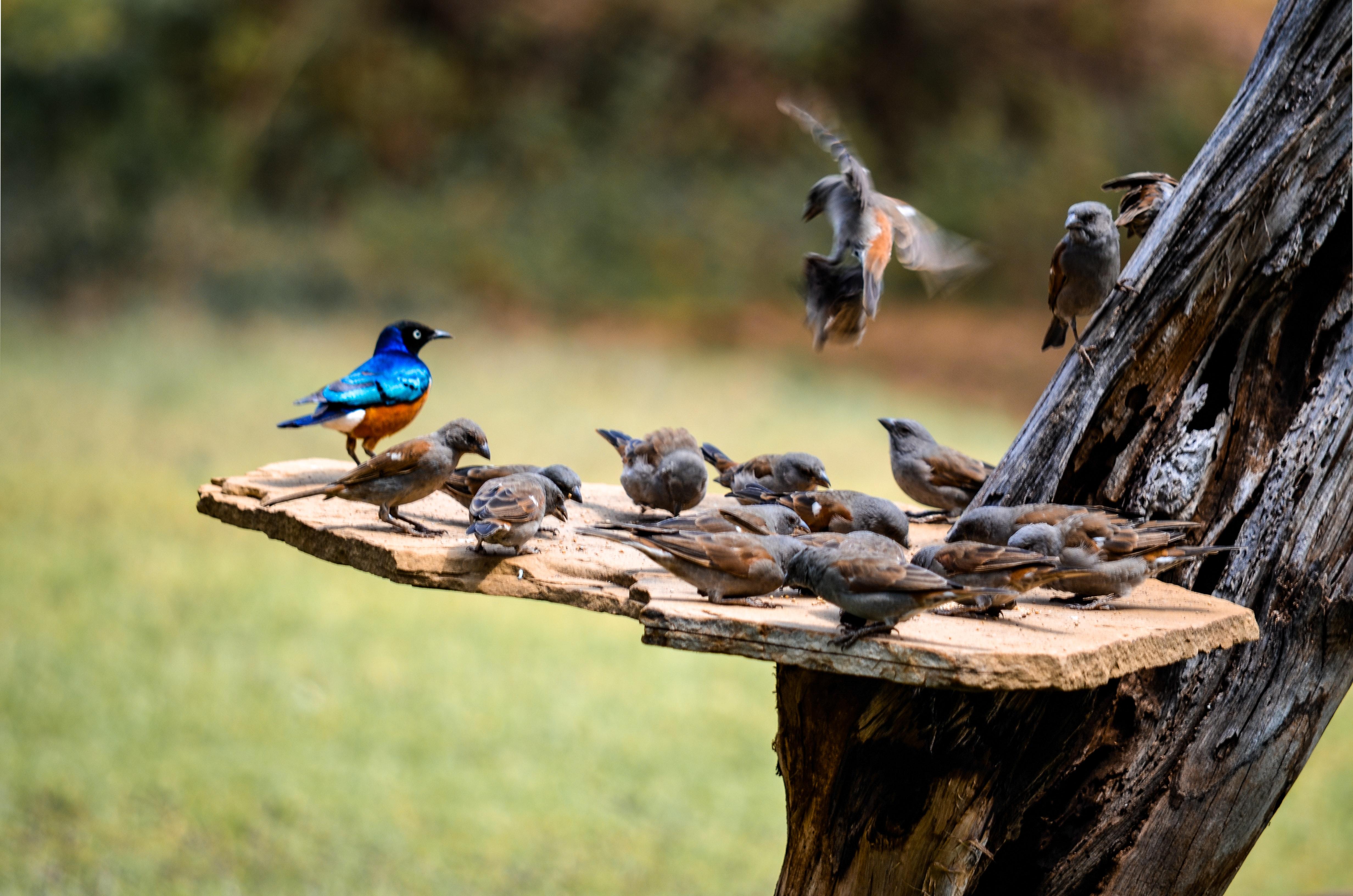 Flock of Birds, Outdoors, Wood, Wildlife photography, Wildlife, HQ Photo