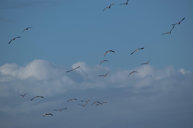 Flock of birds flying photo