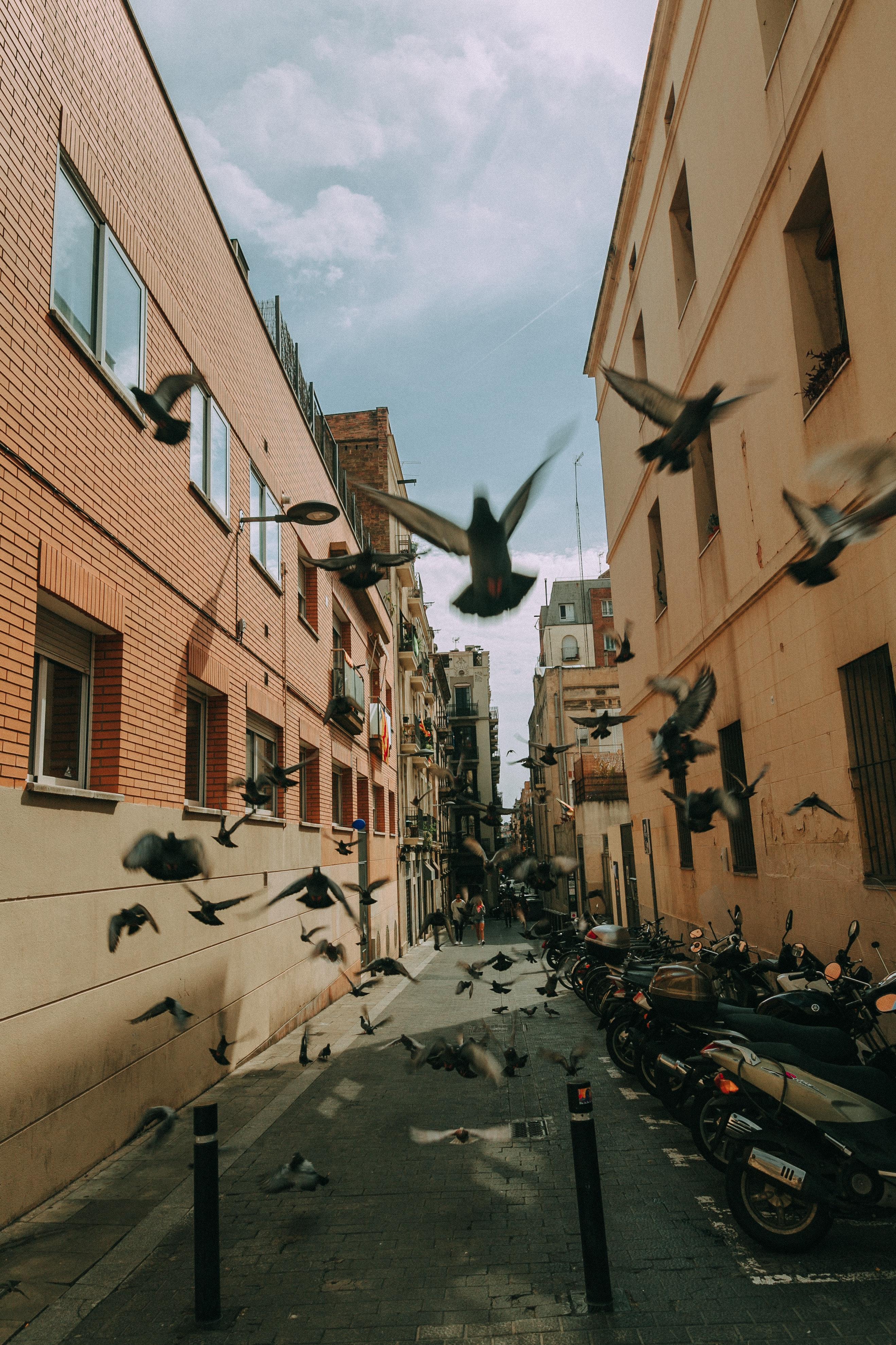 Flock of pigeon photo