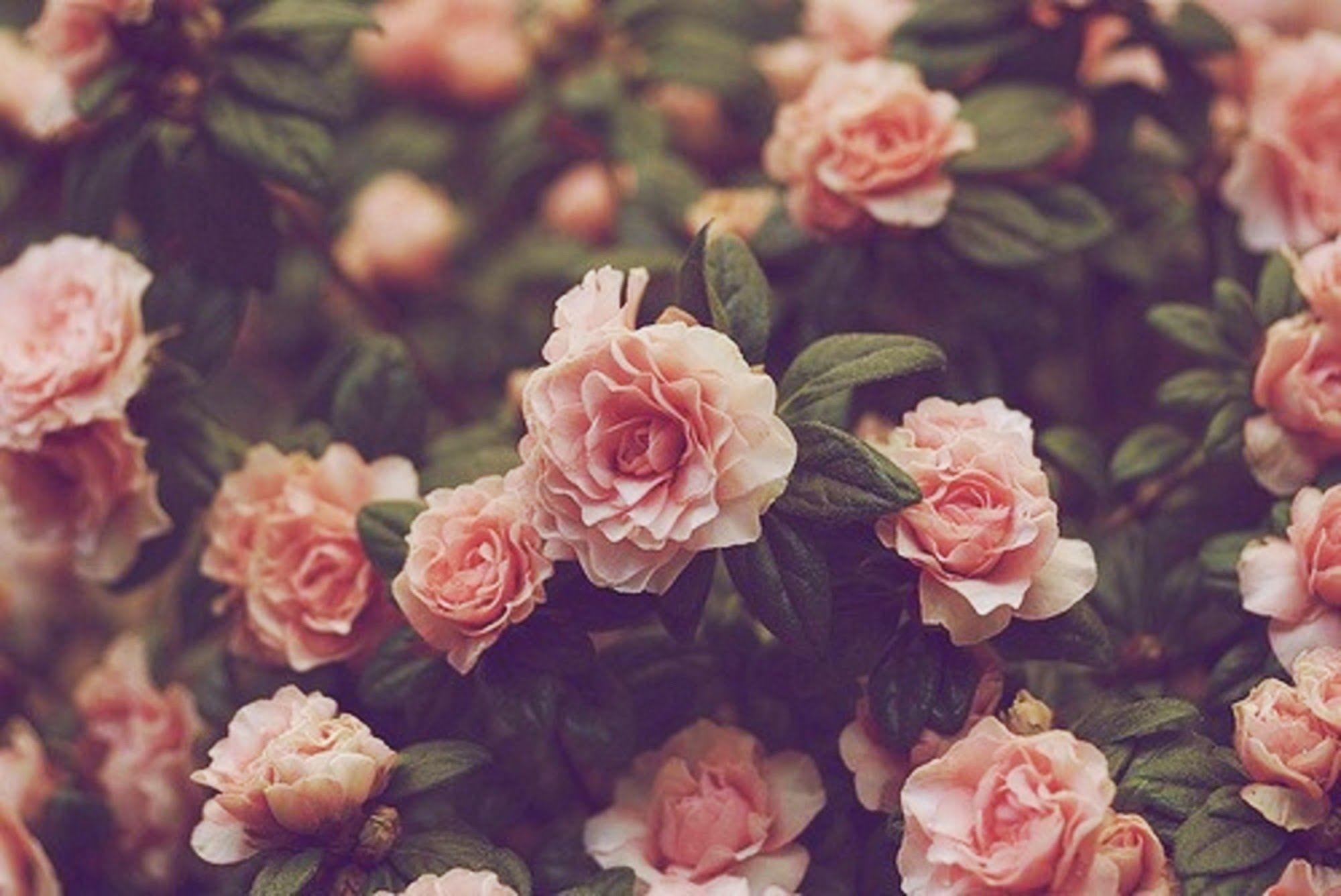 Background: Cool Vintage Floral Background. Vintage Floral Background