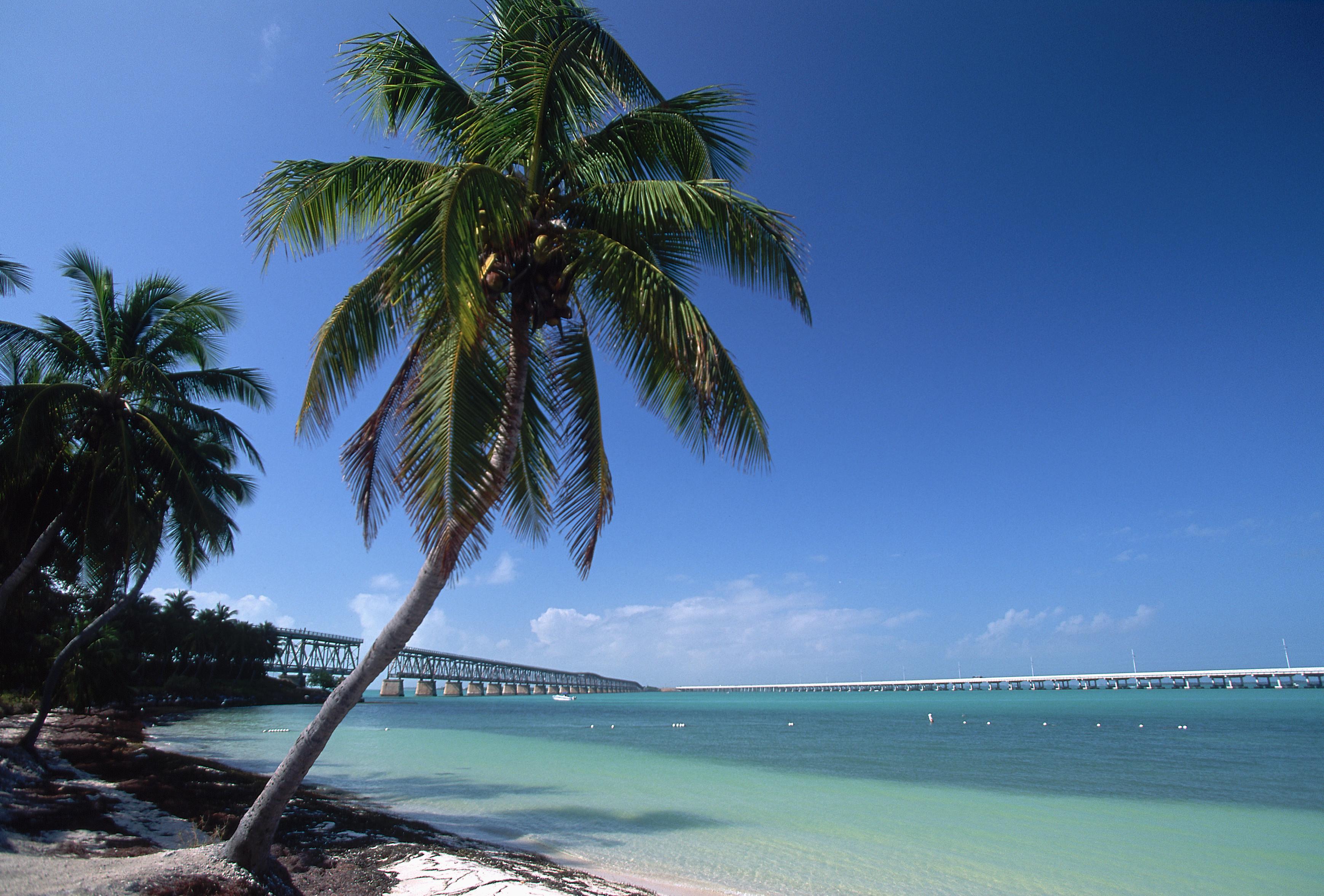 Florida Pictures - Florida - HISTORY.com