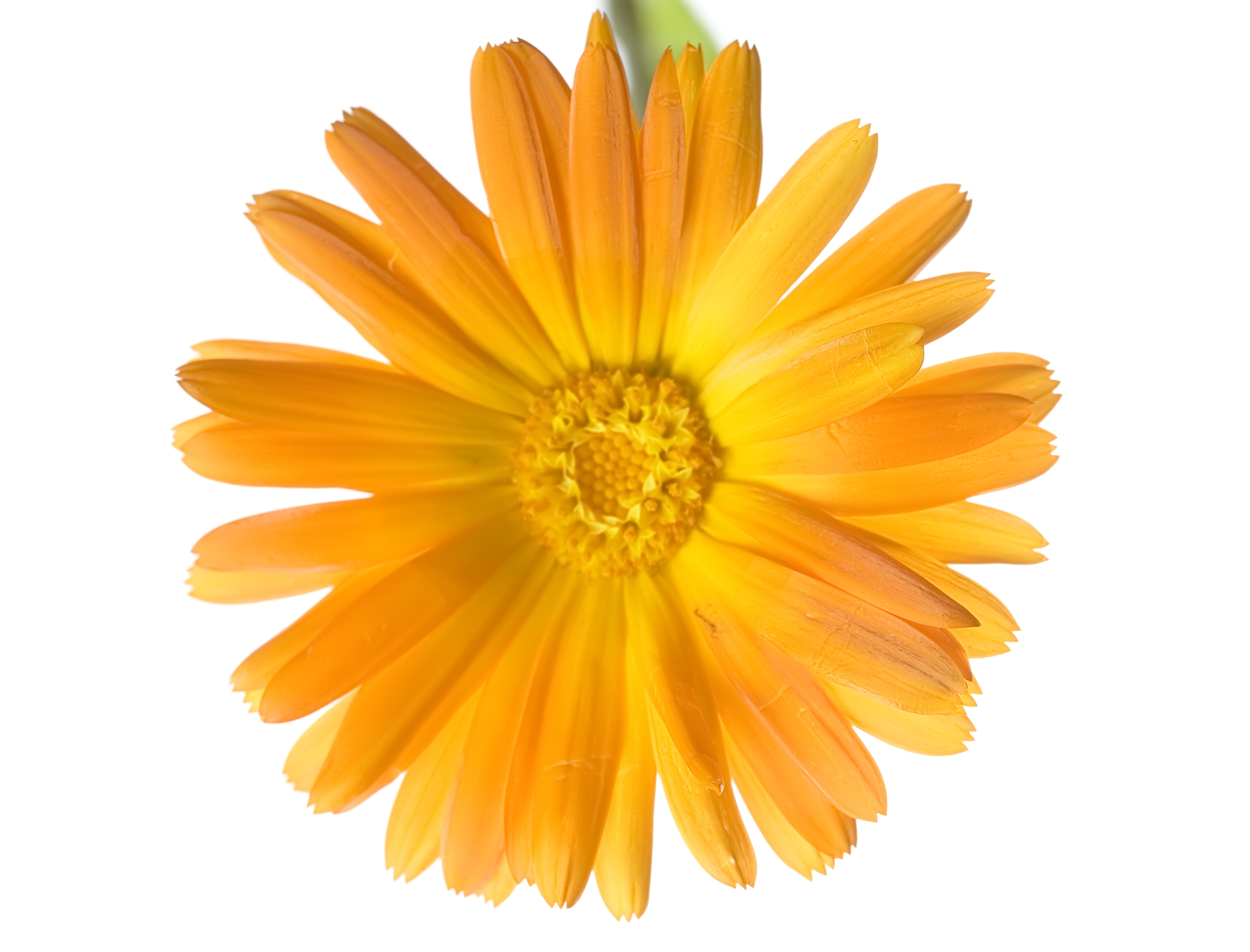 flower, Beautiful, Garden, Orange, Nobody, HQ Photo