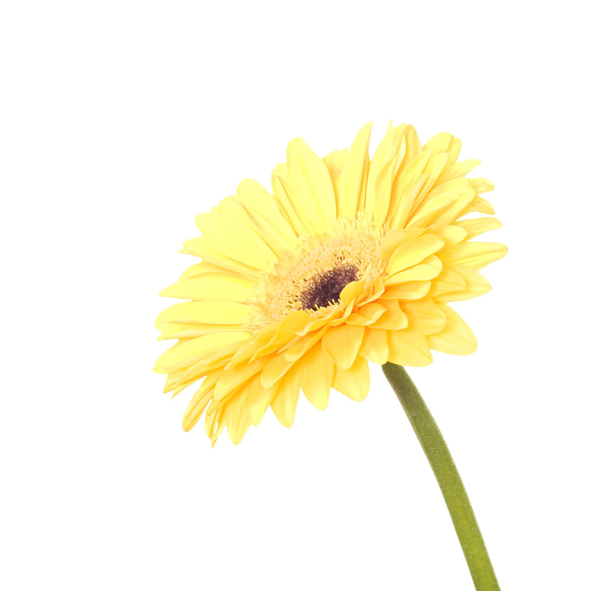 Flower, Closeup, Detail, Flora, Floral, HQ Photo