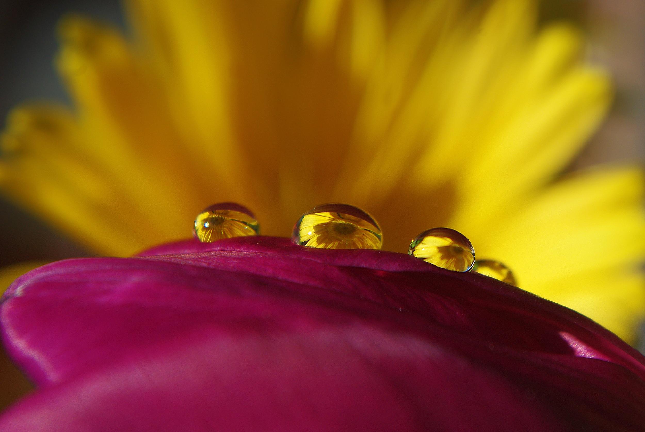 Flower, Beauty, Fresh, Freshness, Nature, HQ Photo