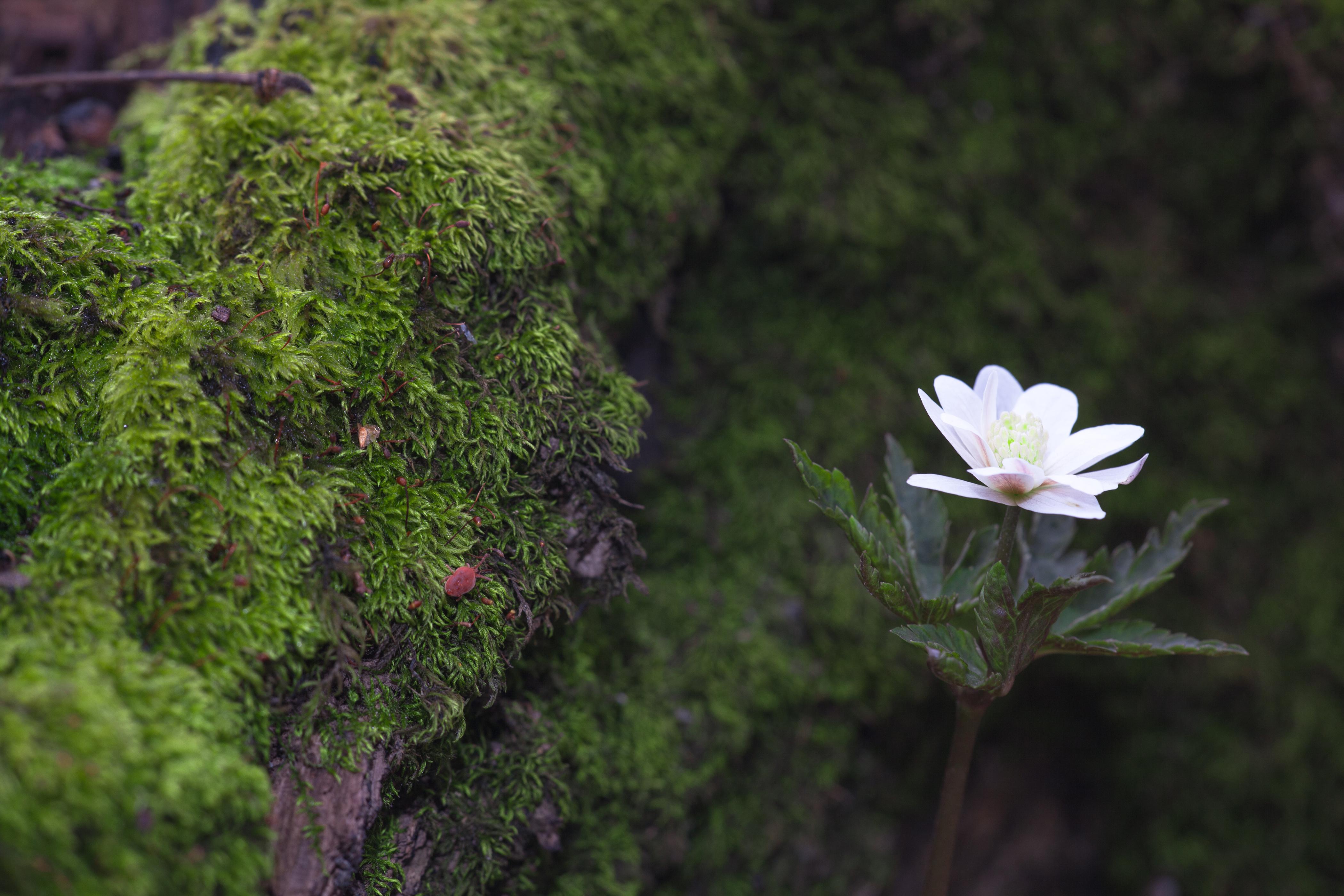 flower, Beautiful, Garden, Spring, Nature, HQ Photo