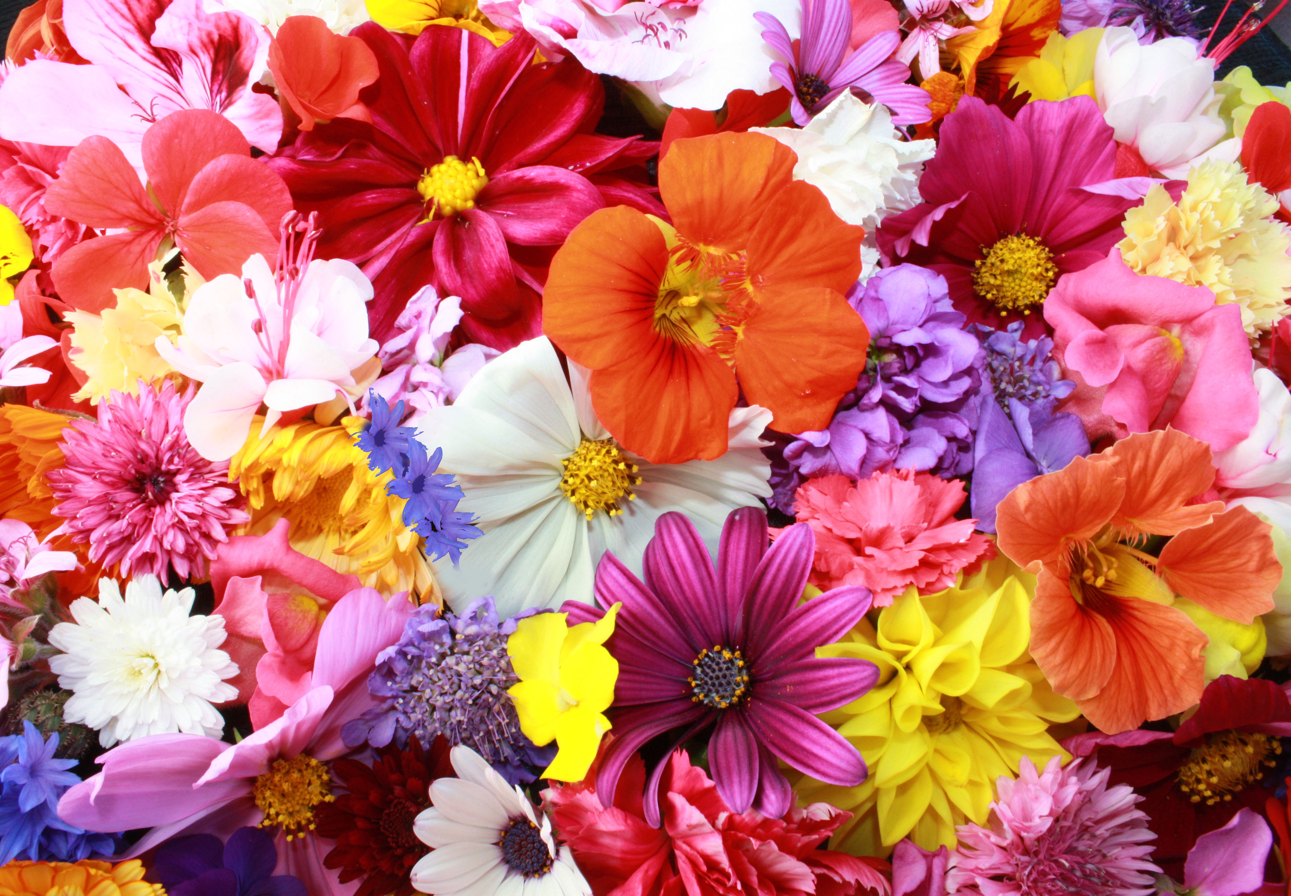 Which Flower Best Reflects Your Soul? | Playbuzz