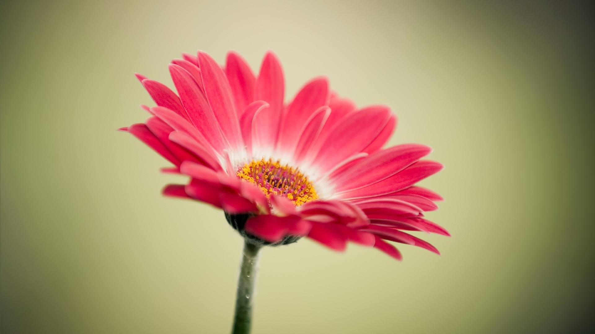30 Beautiful Flower Images Free To Download