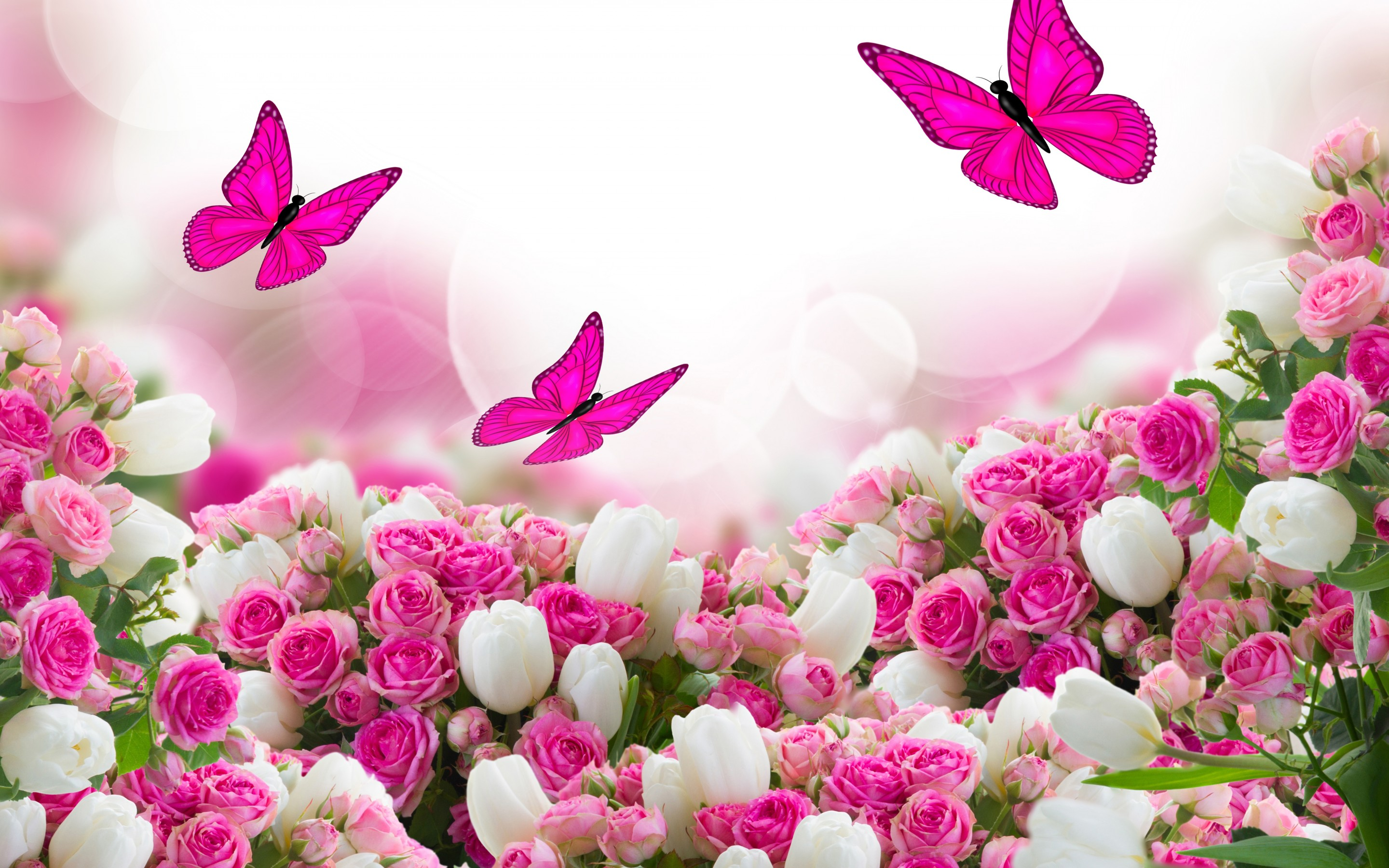 Free Photo Beautiful Pink Flowers Plant Pink Petal Free