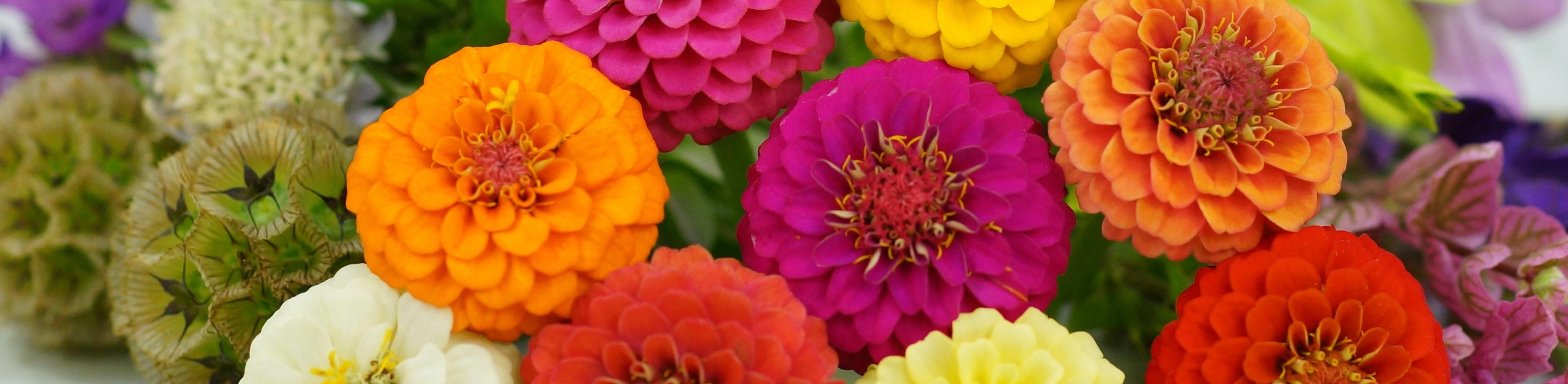 Flower Seeds | Baker Creek Heirloom Seeds