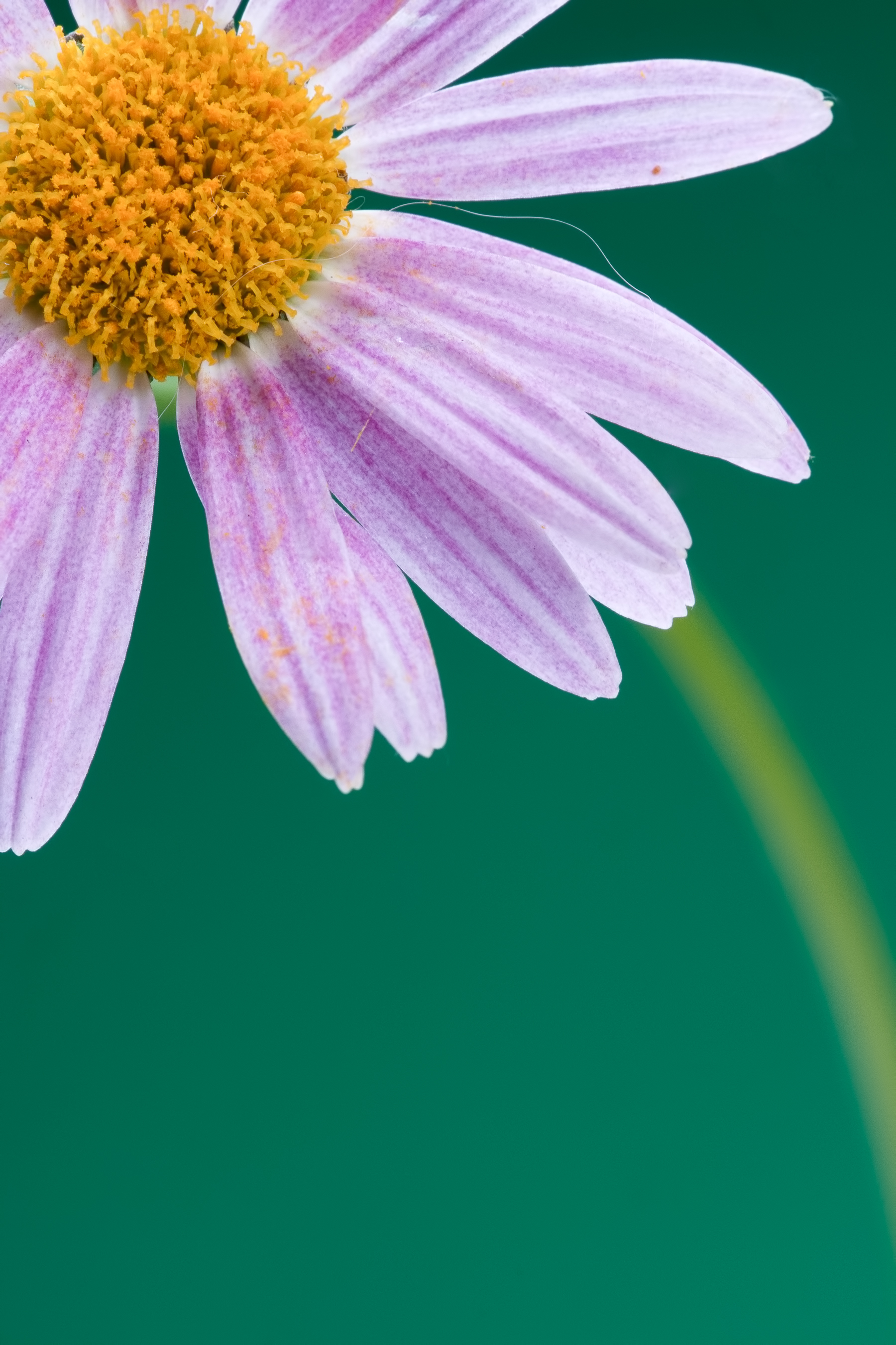 flower, Beautiful, Closeup, Nature, Nobody, HQ Photo