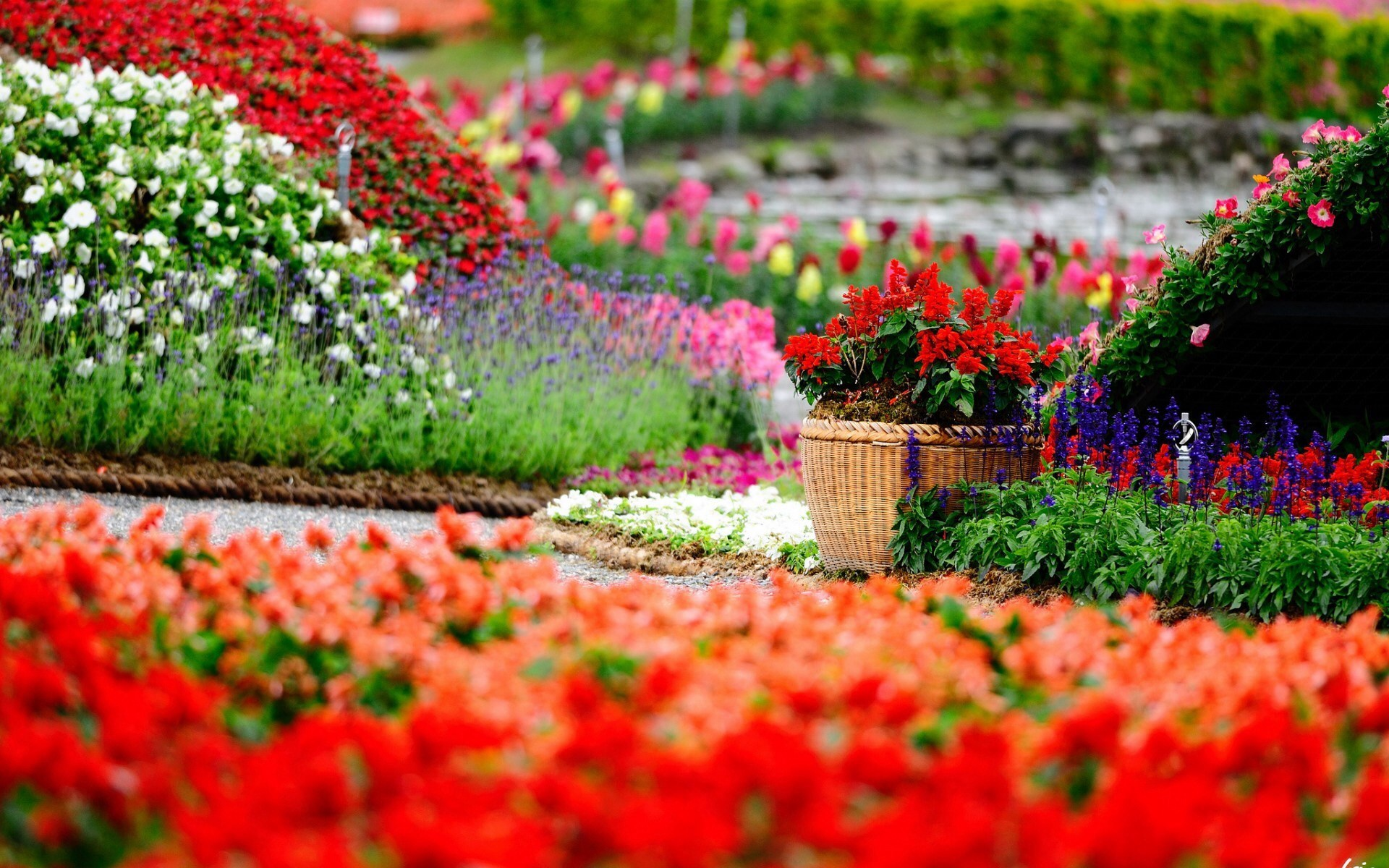 Free Photo Flower And View Flower Free Download Jooinn