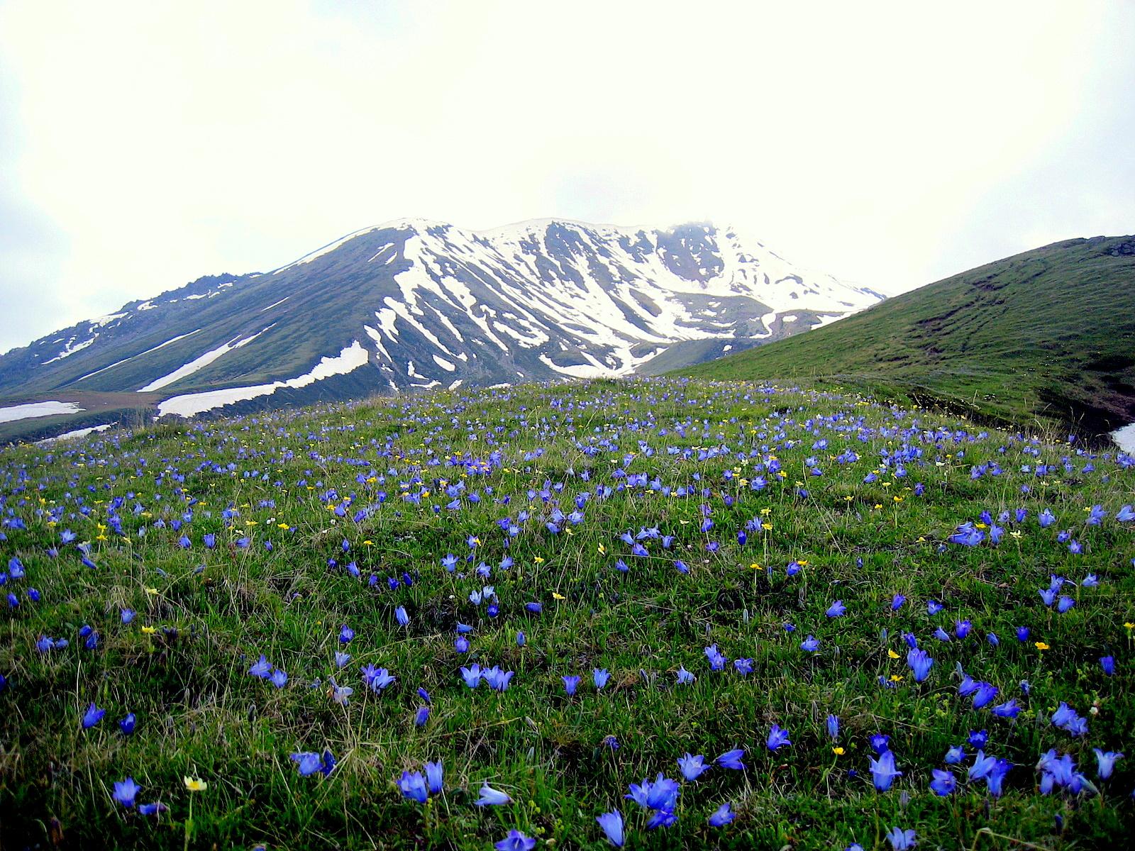 File:View climbing up to Gergeti Glacier, flowers.JPG - Wikimedia ...