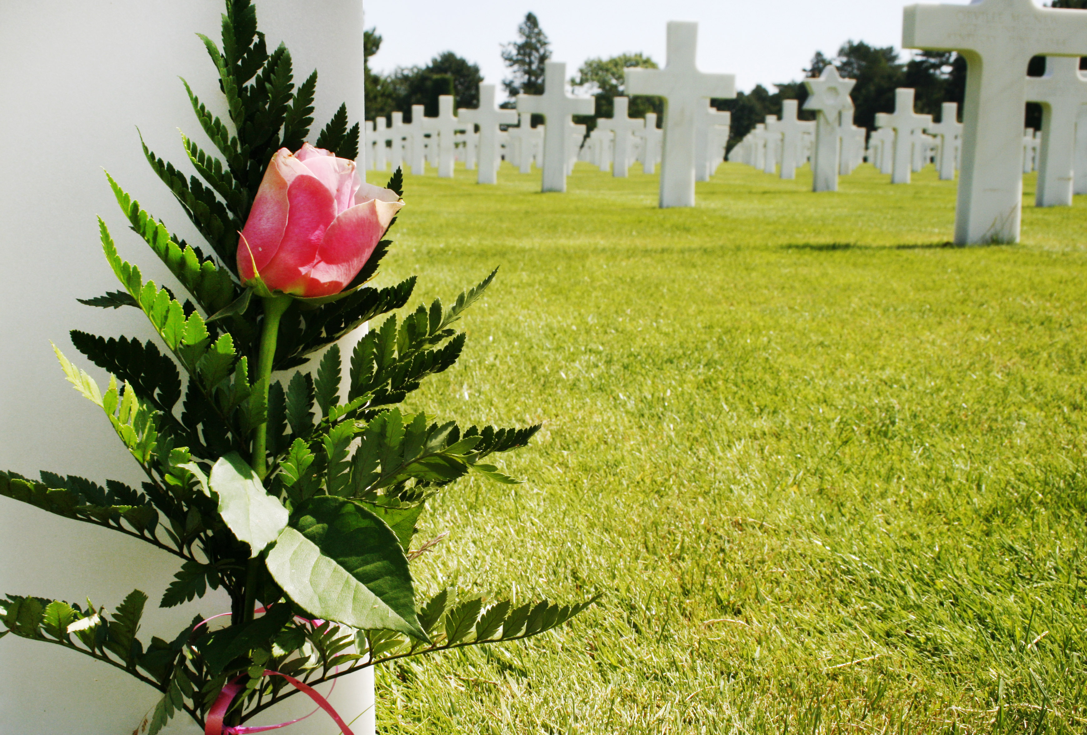 Flower at grave, Army, Graveyard, Tombstone, Tomb, HQ Photo