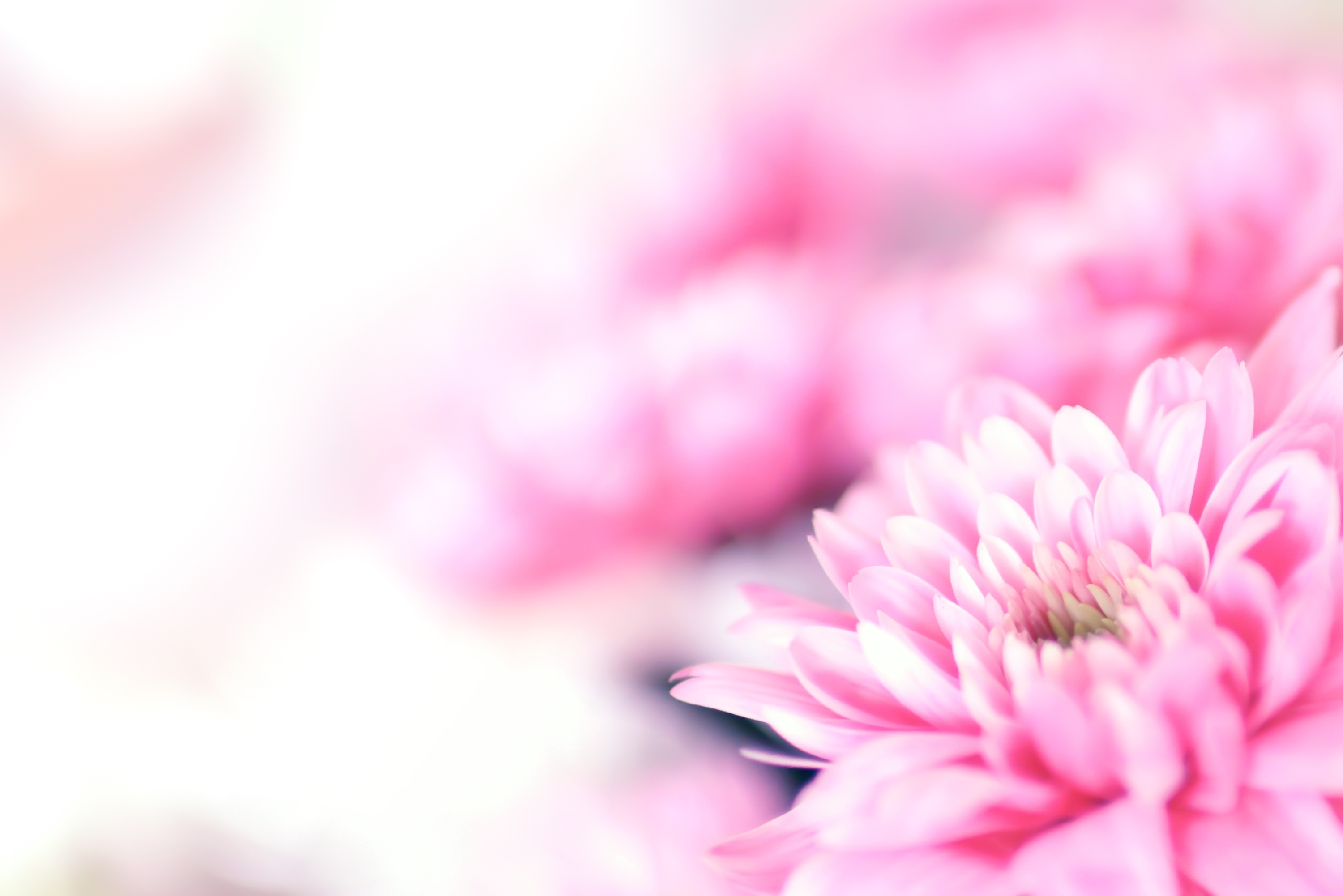 Free photo: Flower background - Beautiful, Blooming ...