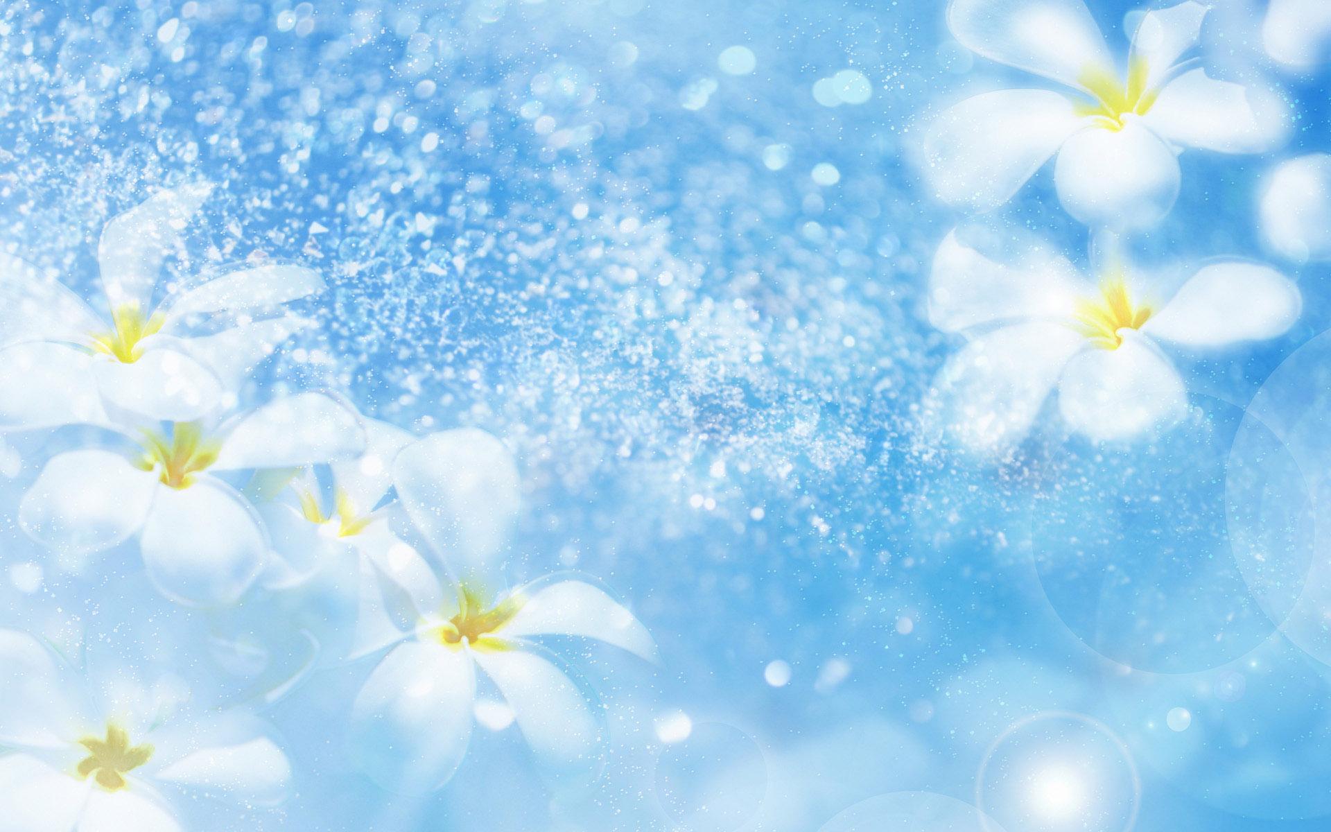 Free Photo Flower Background Soft Summer White Free Download