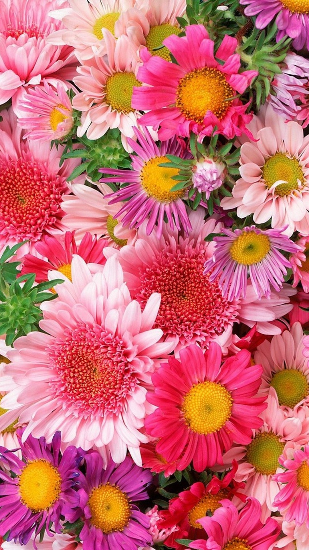 Free Photo Flower Background Many Outdoor Pretty Free