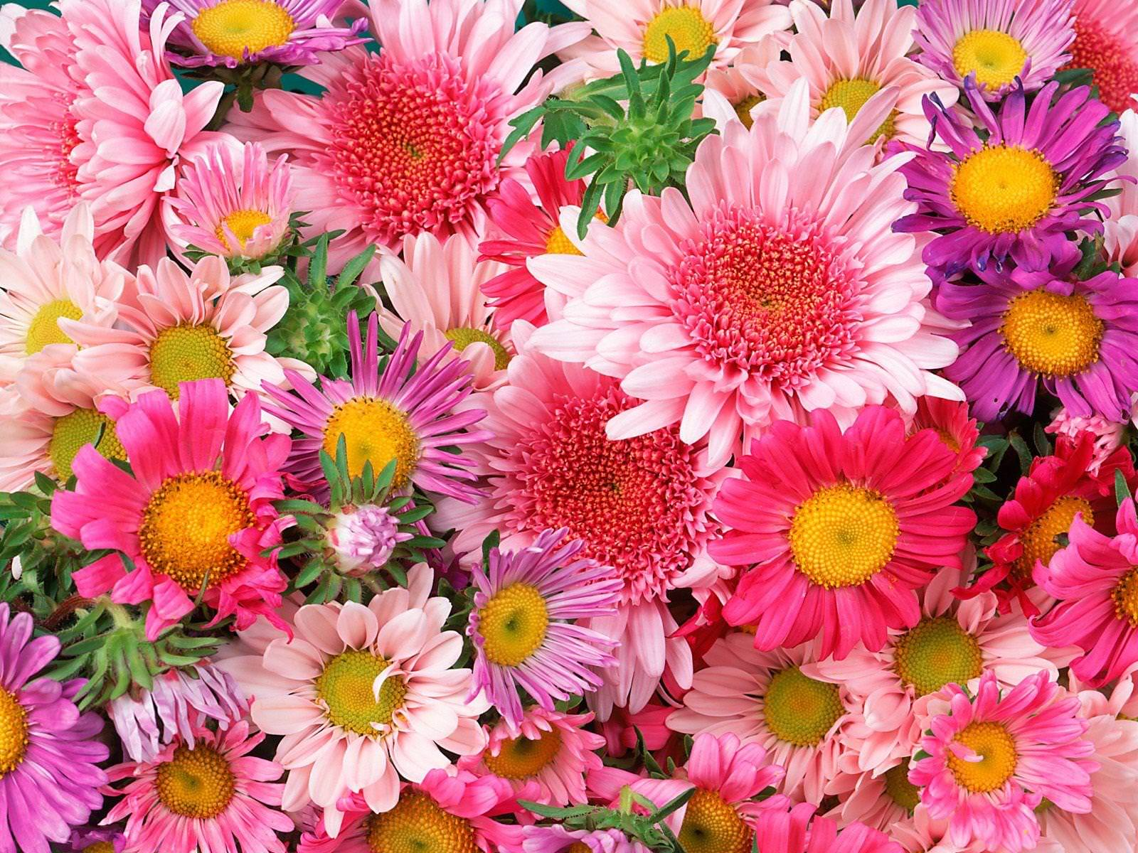 Free photo: Flower Background - Outdoor, Petal, Pretty ...