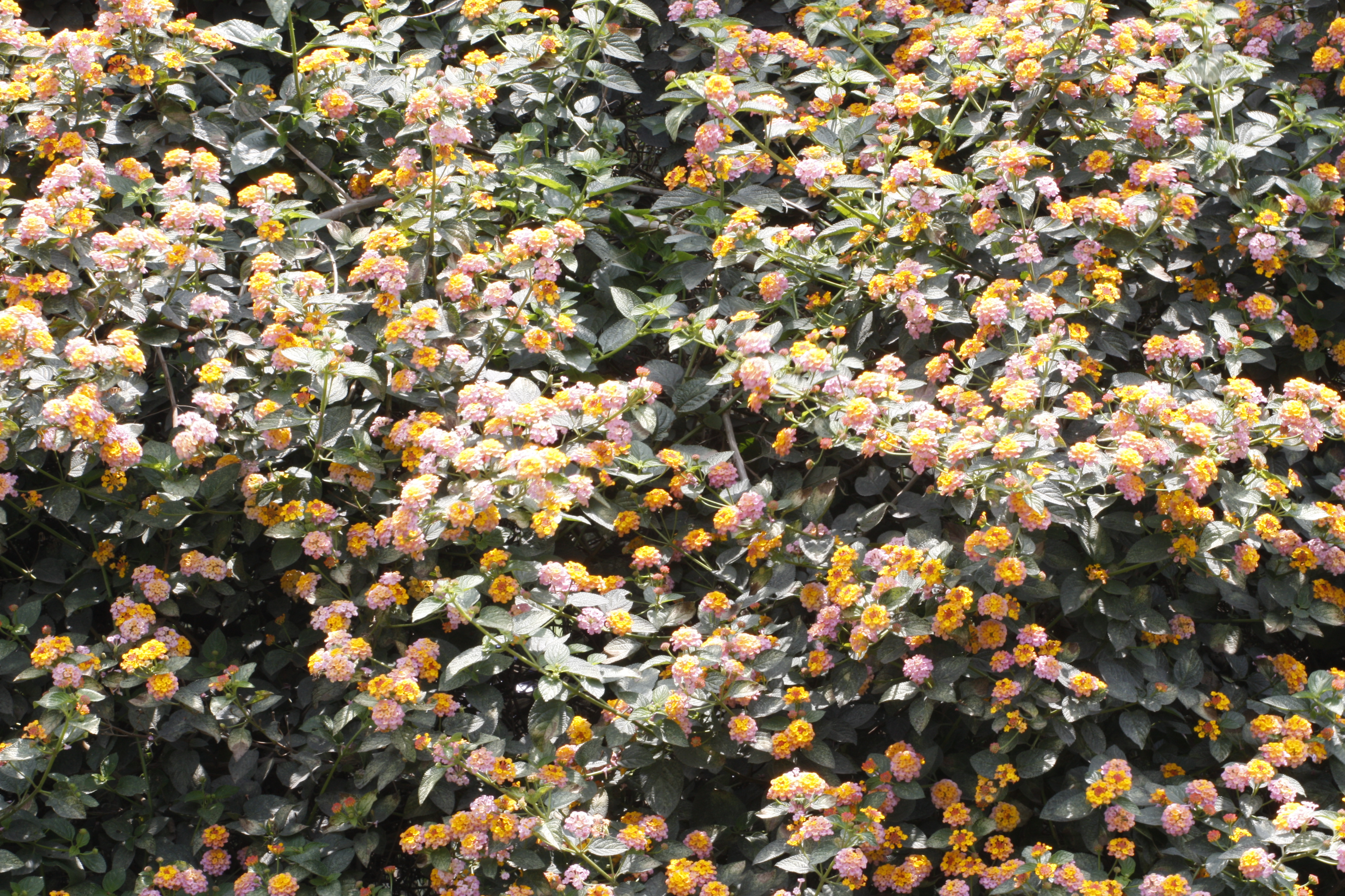 Flower bed, Flowers, Garden, Green, Leaves, HQ Photo