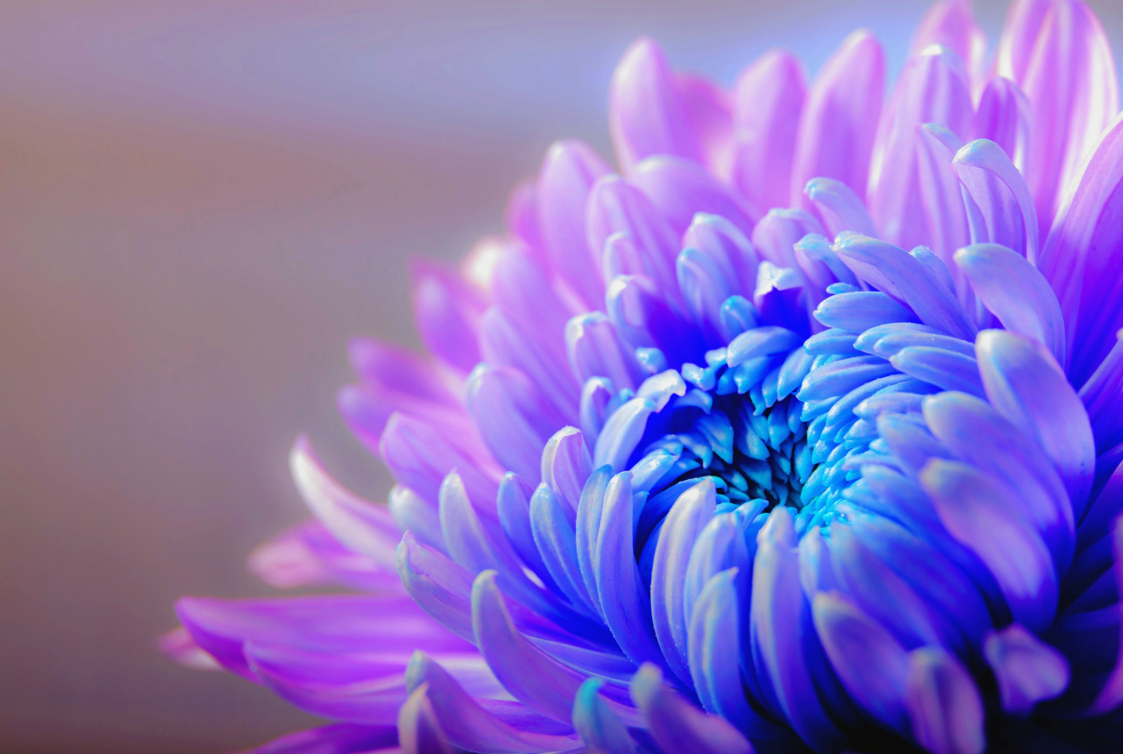 Free photo: Flower Blooming - Nature, Purple, Freshness - Free ...