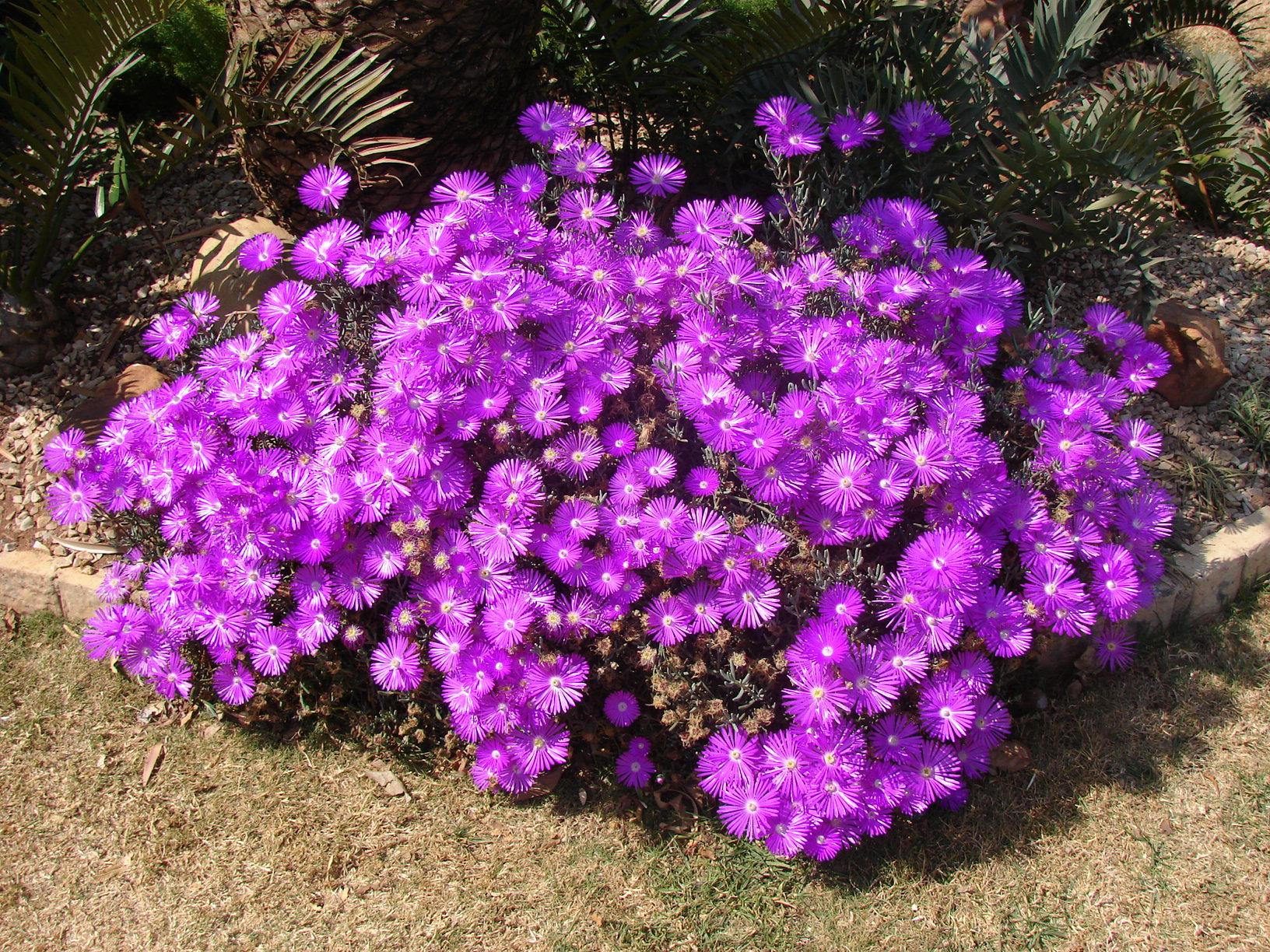 Free photo flower bushes plant plants up free download jooinn flower bushes izmirmasajfo