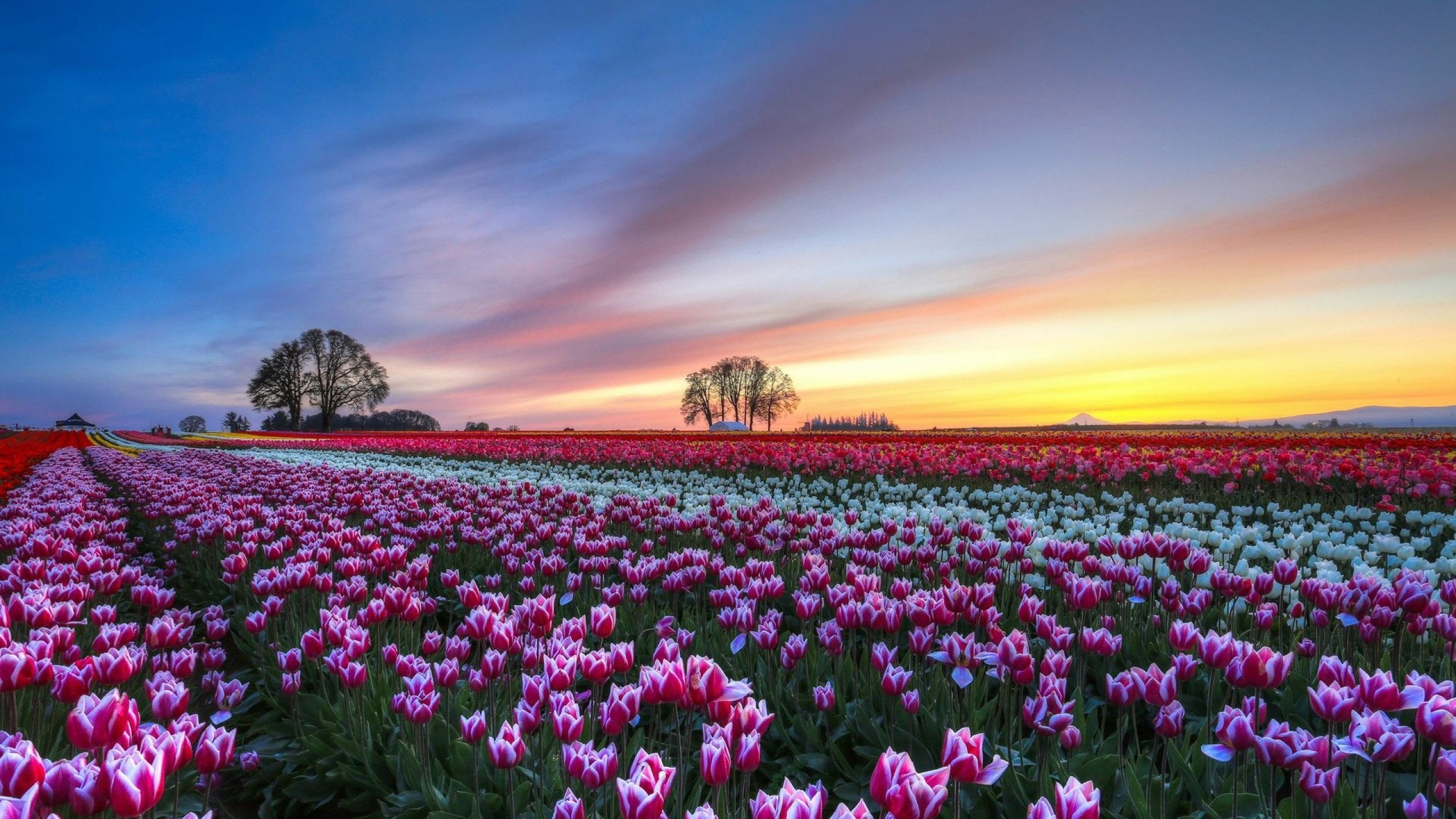 Fields of flowers pictures kitchen cabinets and flower photo flower field garden nature fresh beautiful photo gallery of izmirmasajfo