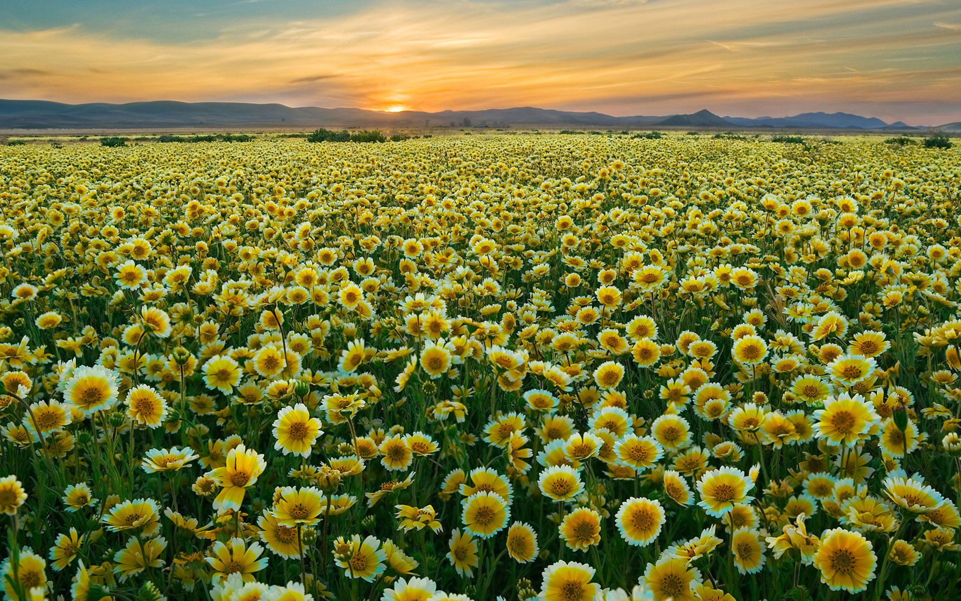 Free photo flower field garden nature fresh free download flower field mightylinksfo