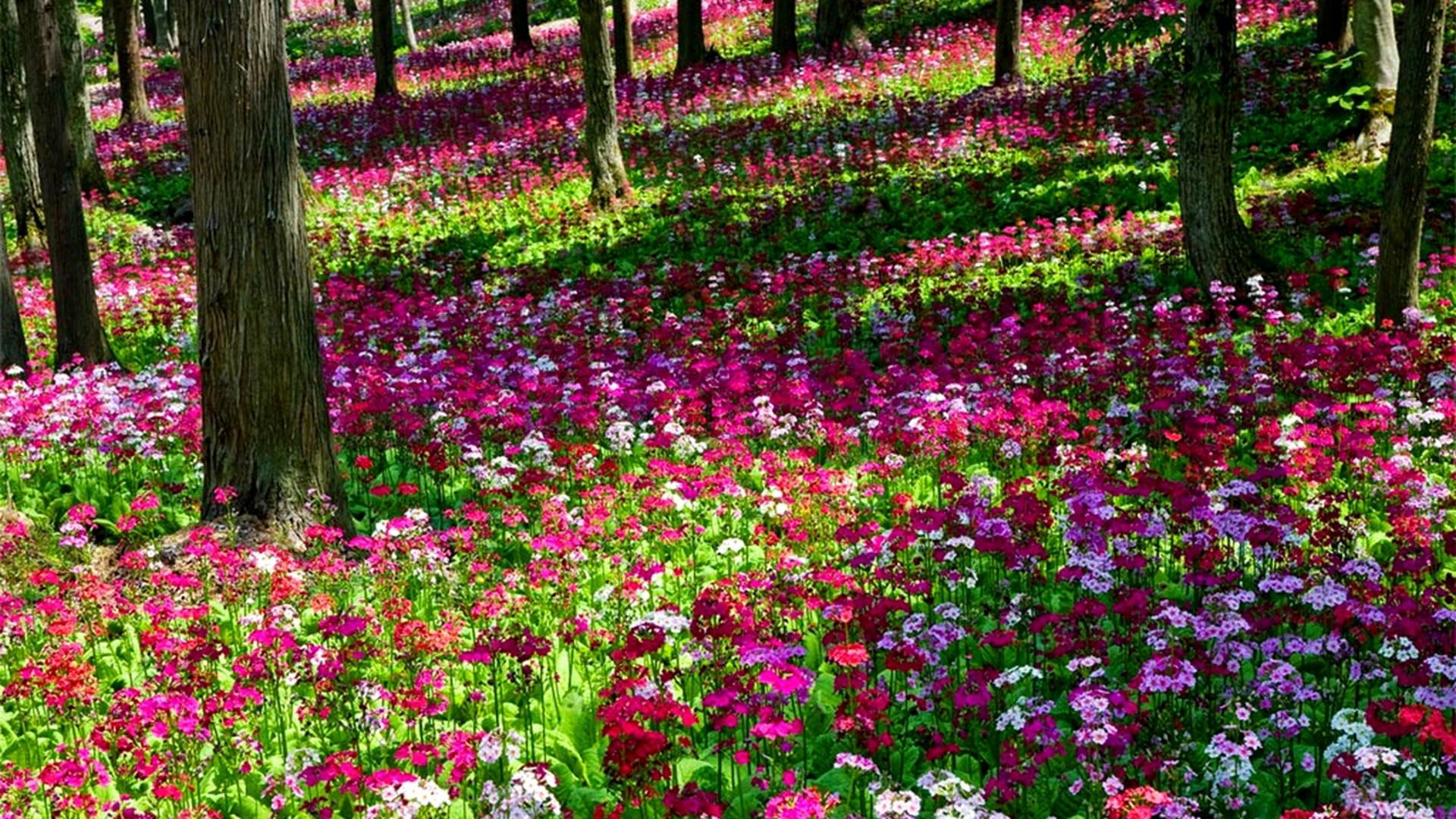 Free Photo Flower Garden Season Summer Well Free Download