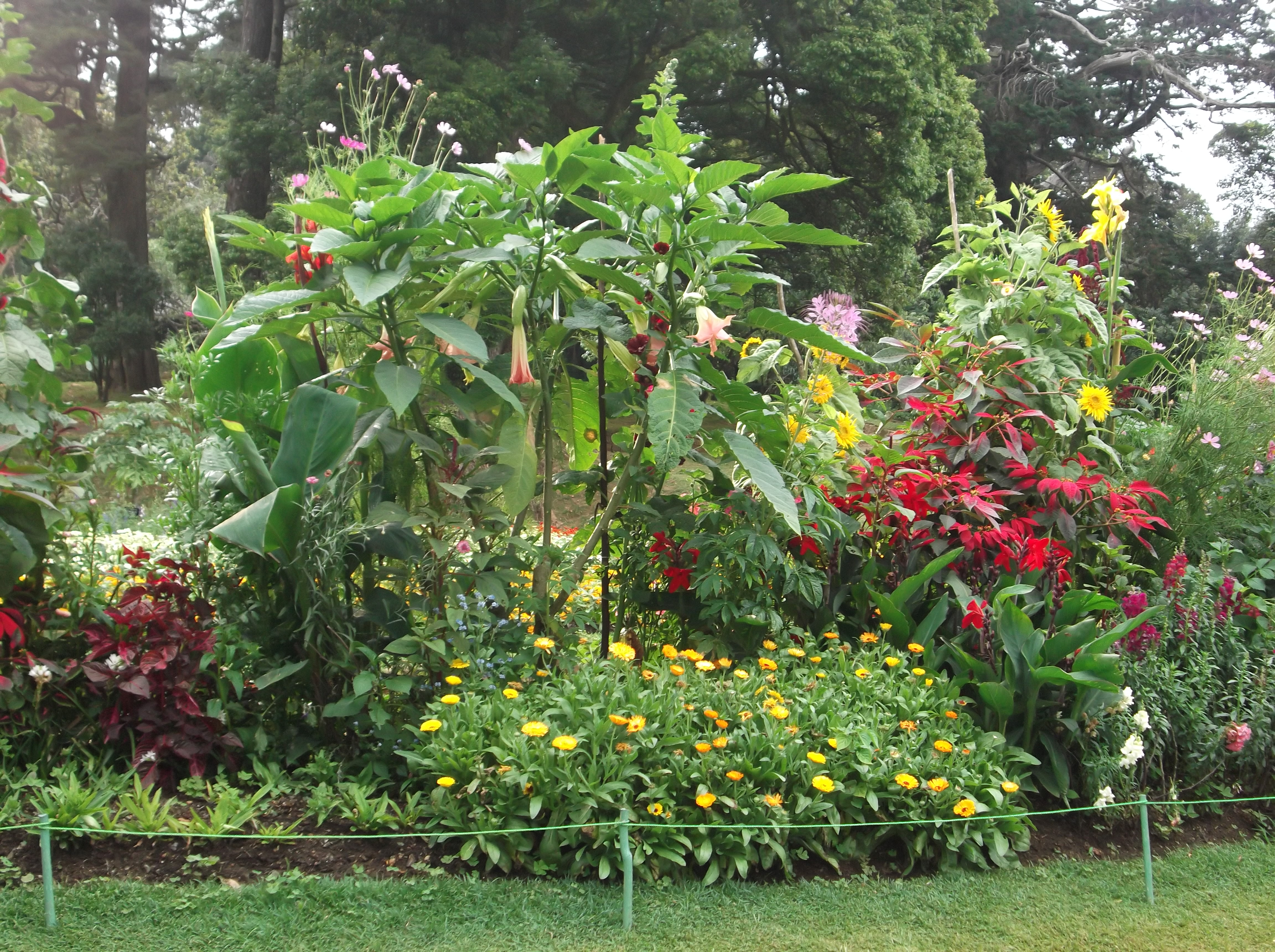Flower Garden Trees Plants Flowers Hq Photo