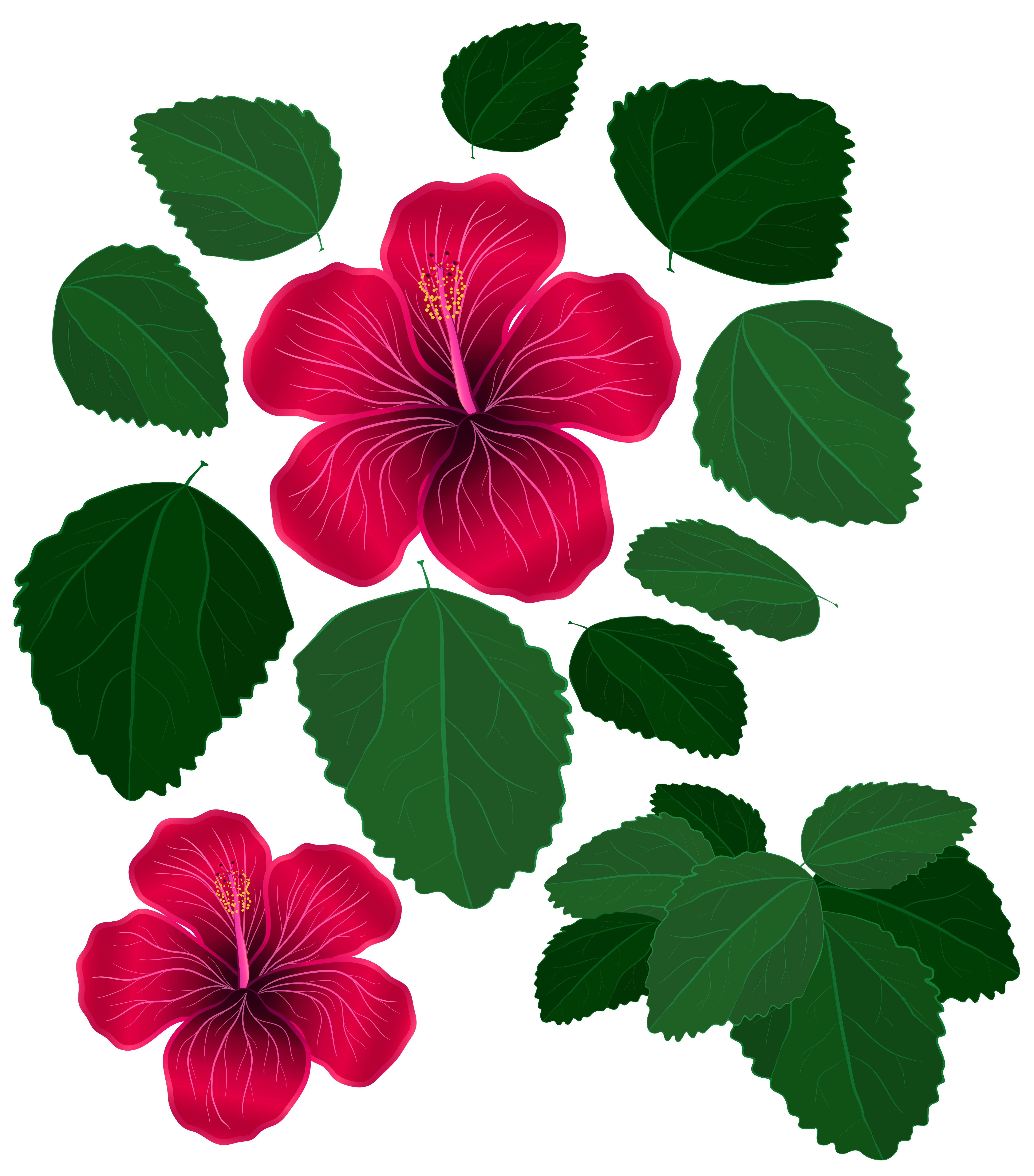 Flower and Leaves for Decorations Transparent Clipart | Gallery ...