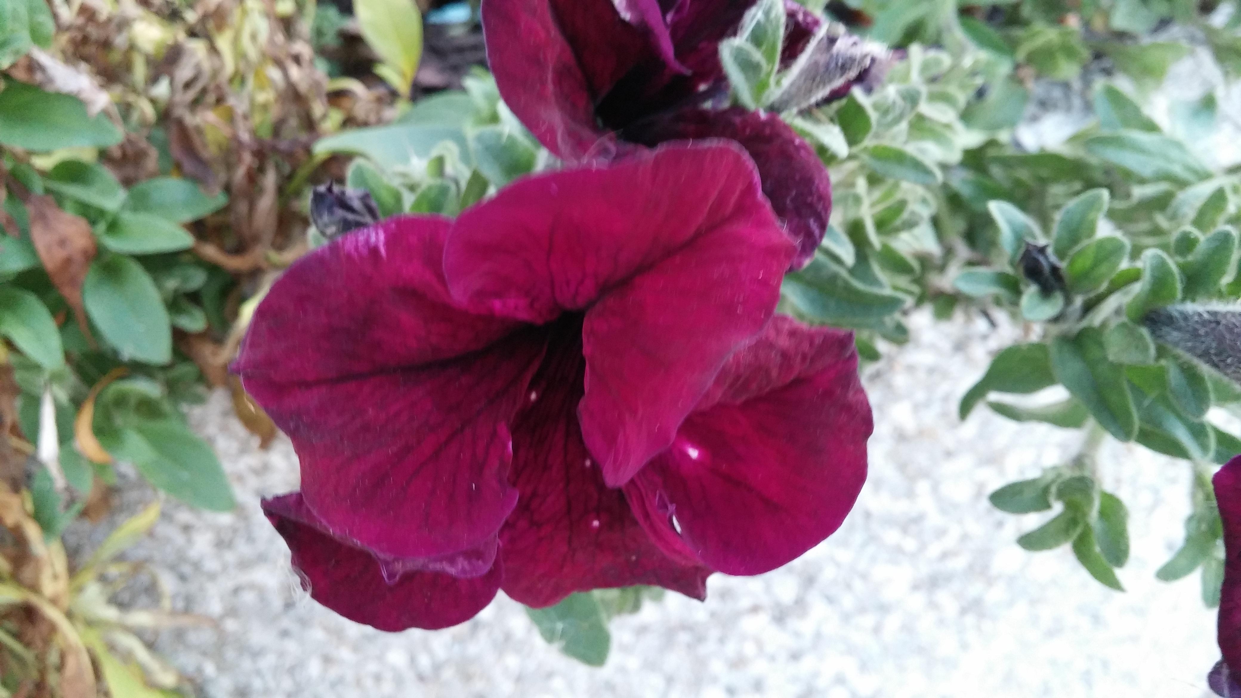 Flower lips, Flower, Nature, Outside, HQ Photo