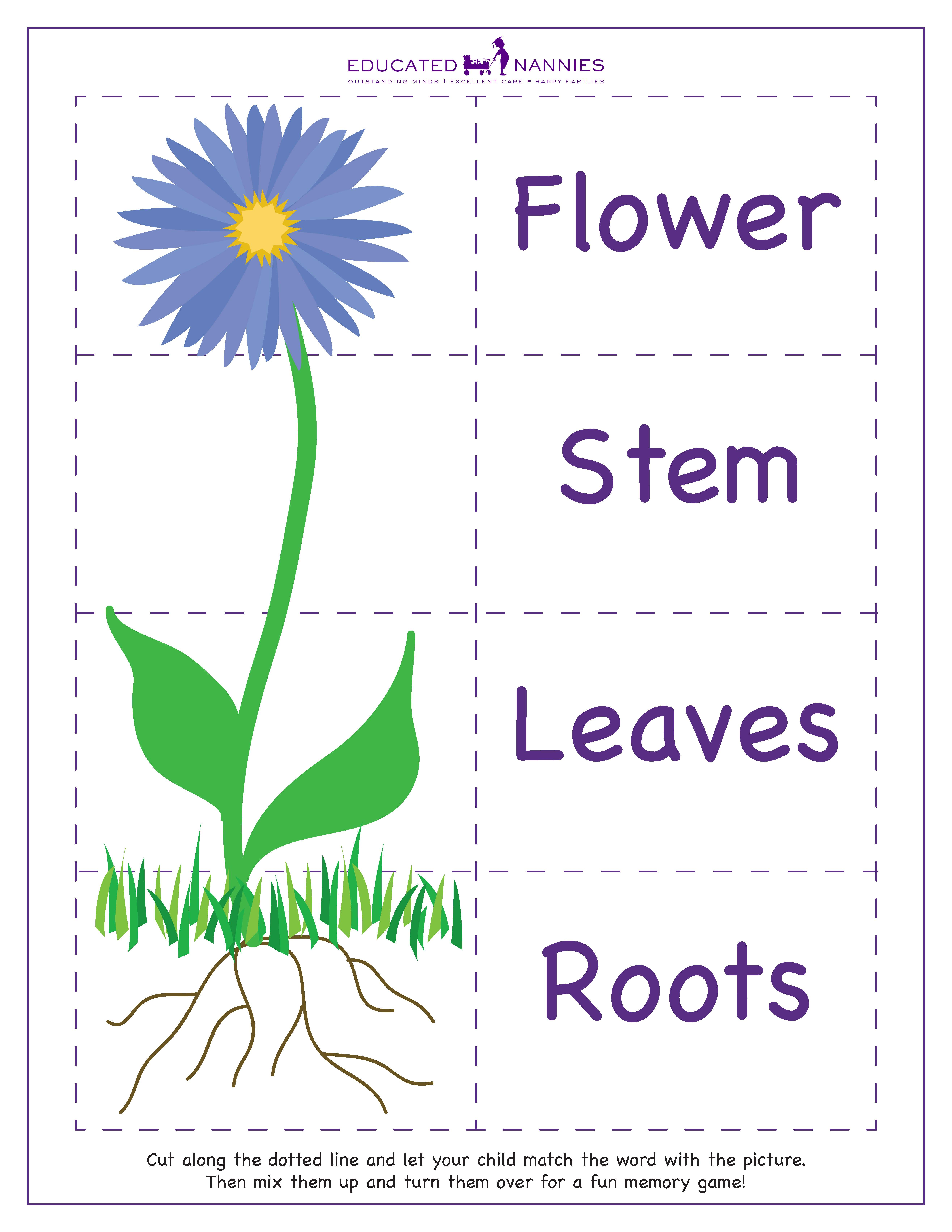 Free photo: Flower Parts - Close-up, Flower, Macro - Free ...