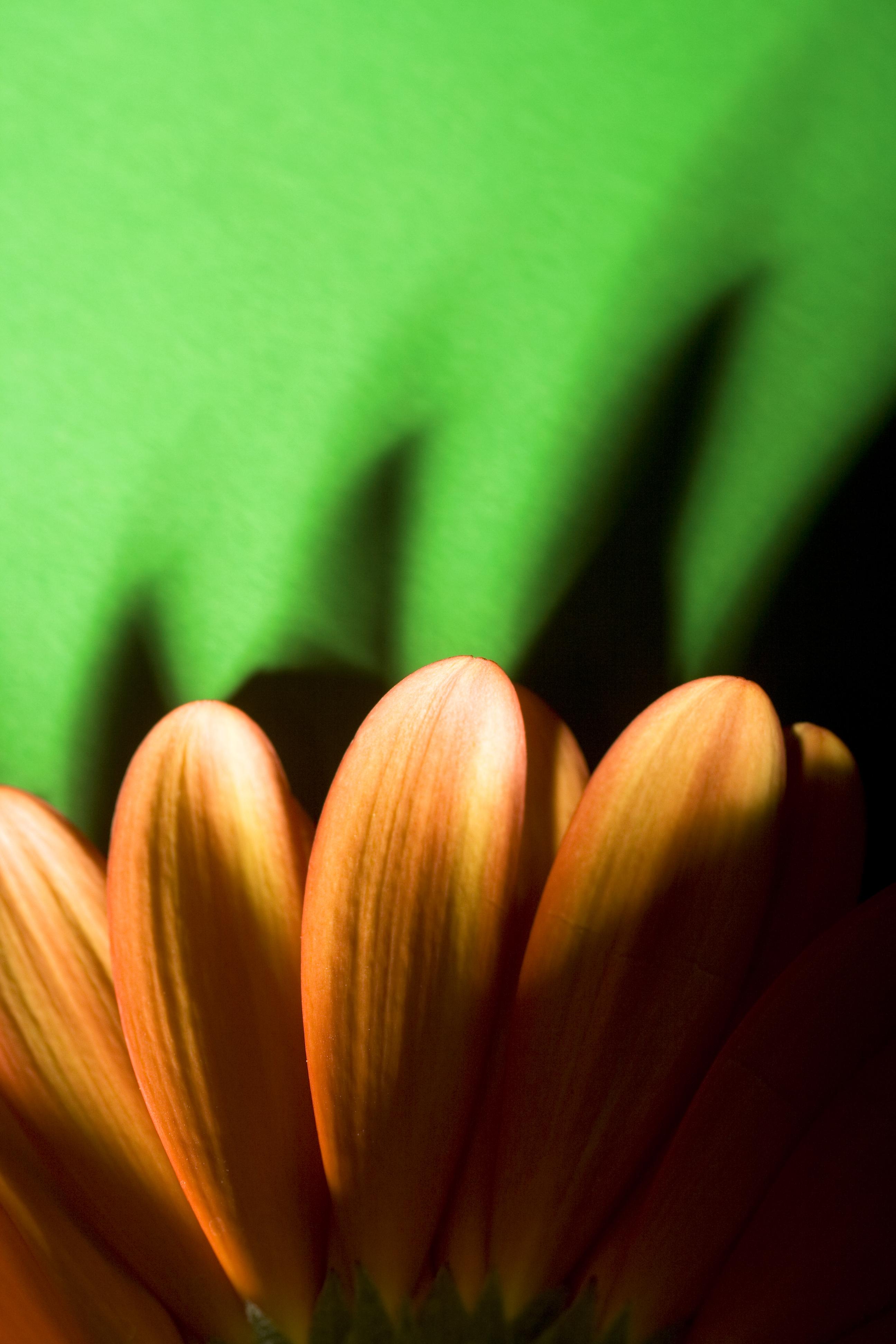 Flower Pedals, Summer, Studio, Spring, Pretty, HQ Photo