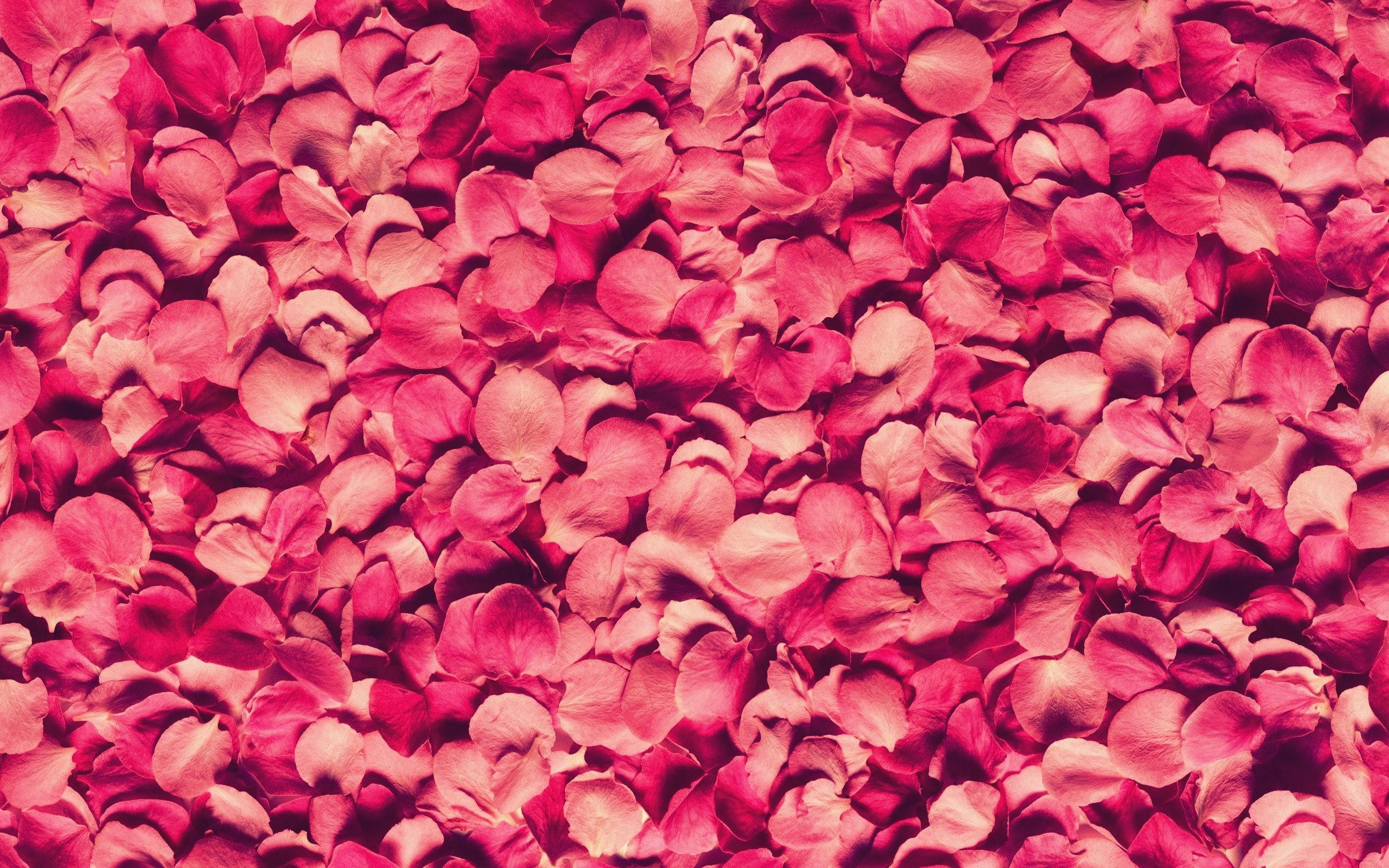 Colourful Flower Petals – WeNeedFun