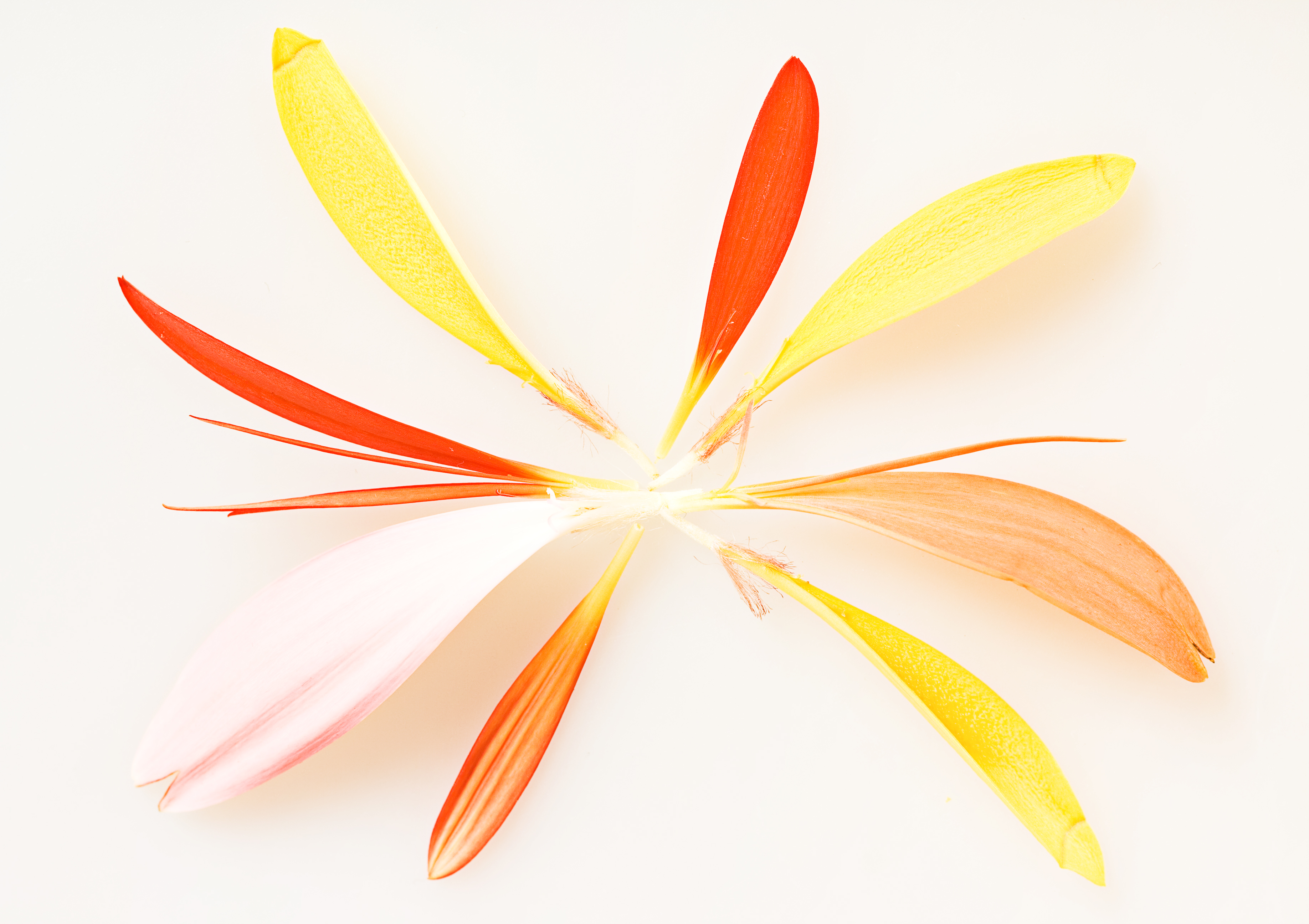 Flower petals, Colors, Nature, Seeds, Round, HQ Photo