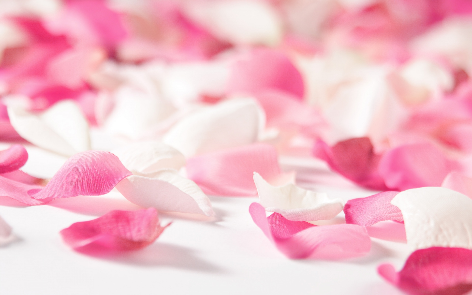 Flowers Flower Petals wallpapers (Desktop, Phone, Tablet) - Awesome ...