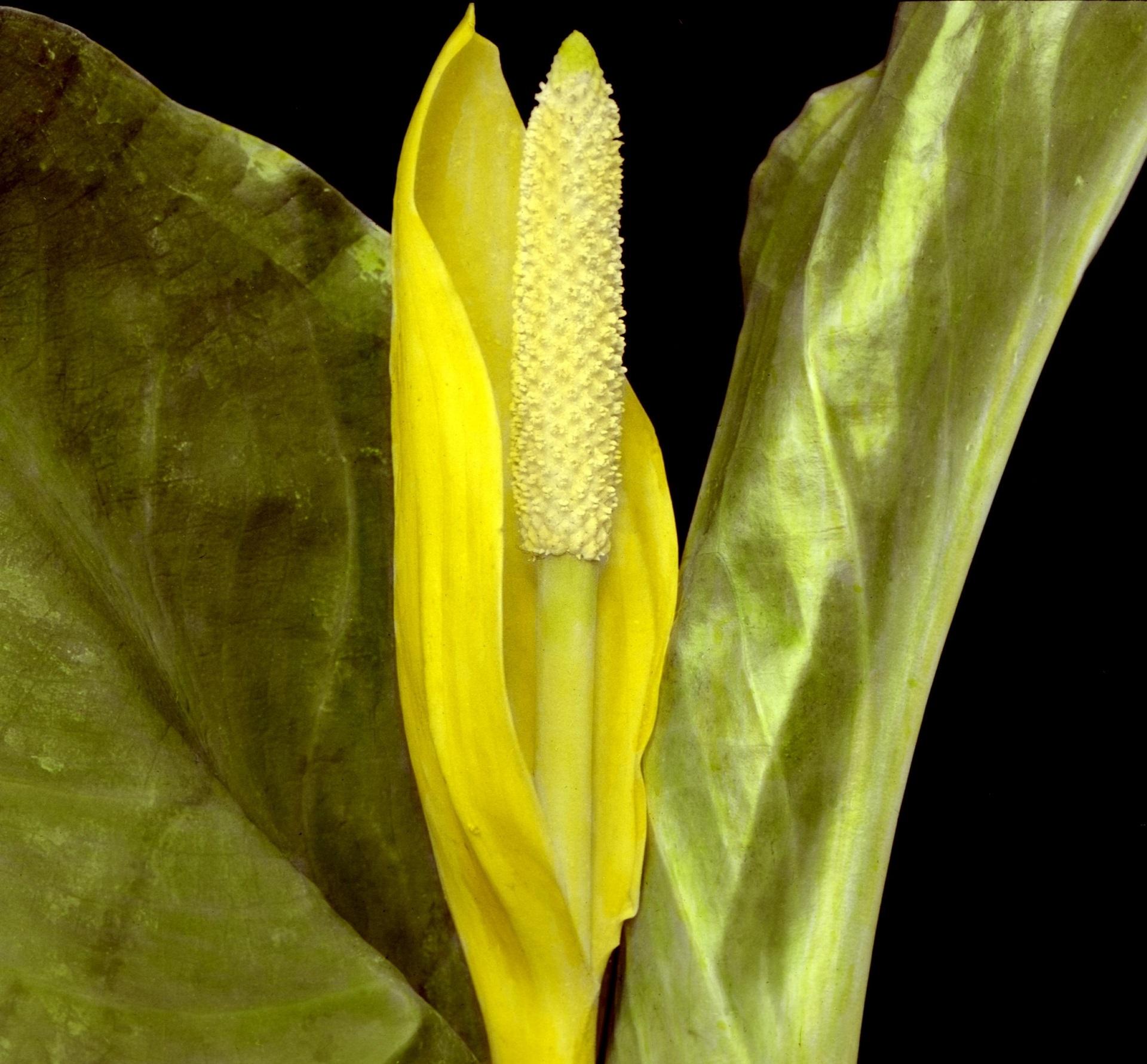 Flower Plant, Blooming, Flower, Fragrance, Fresh, HQ Photo