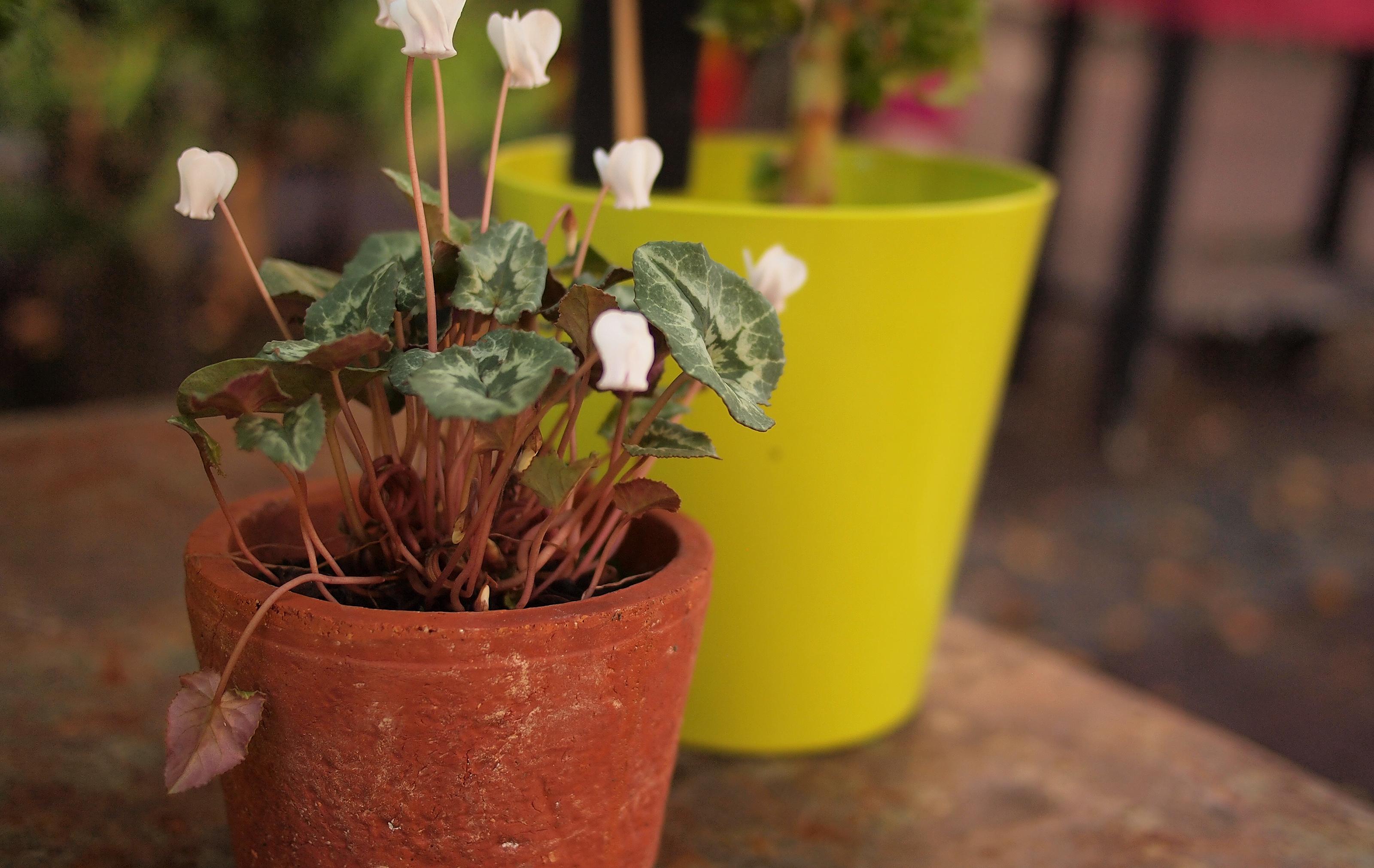 Flower Pot, Brown, Flower, Nature, Plants, HQ Photo