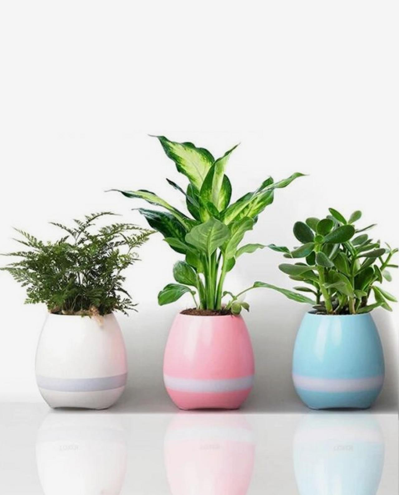Magic Flower Pot Speaker - HDTV Entertainment