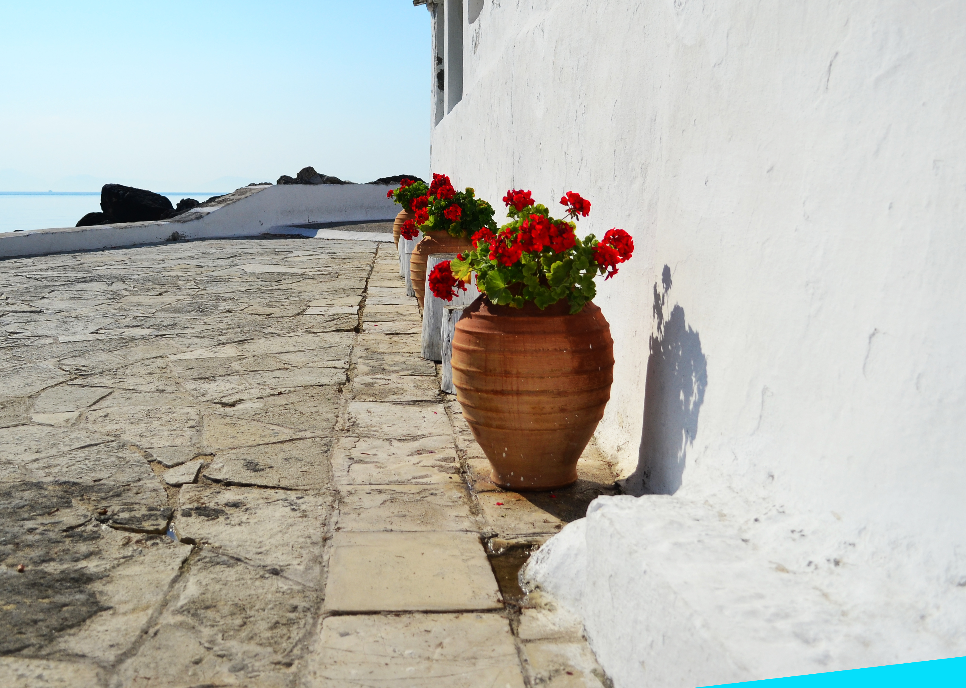 Flower pot, Flower, Outside, Pavement, Pot, HQ Photo