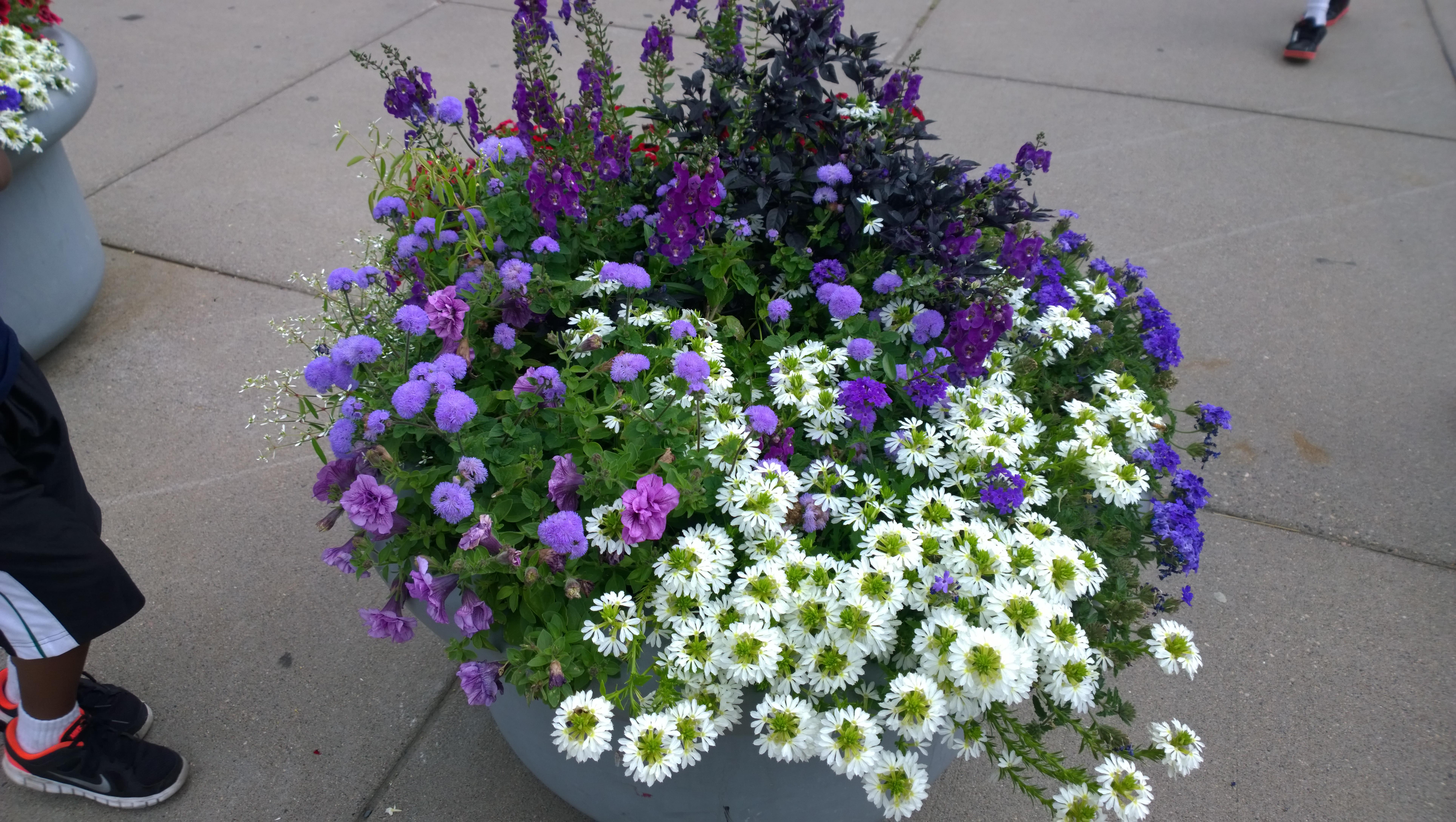 Flower Pot, Beautiful, Flower, Outside, Pot, HQ Photo