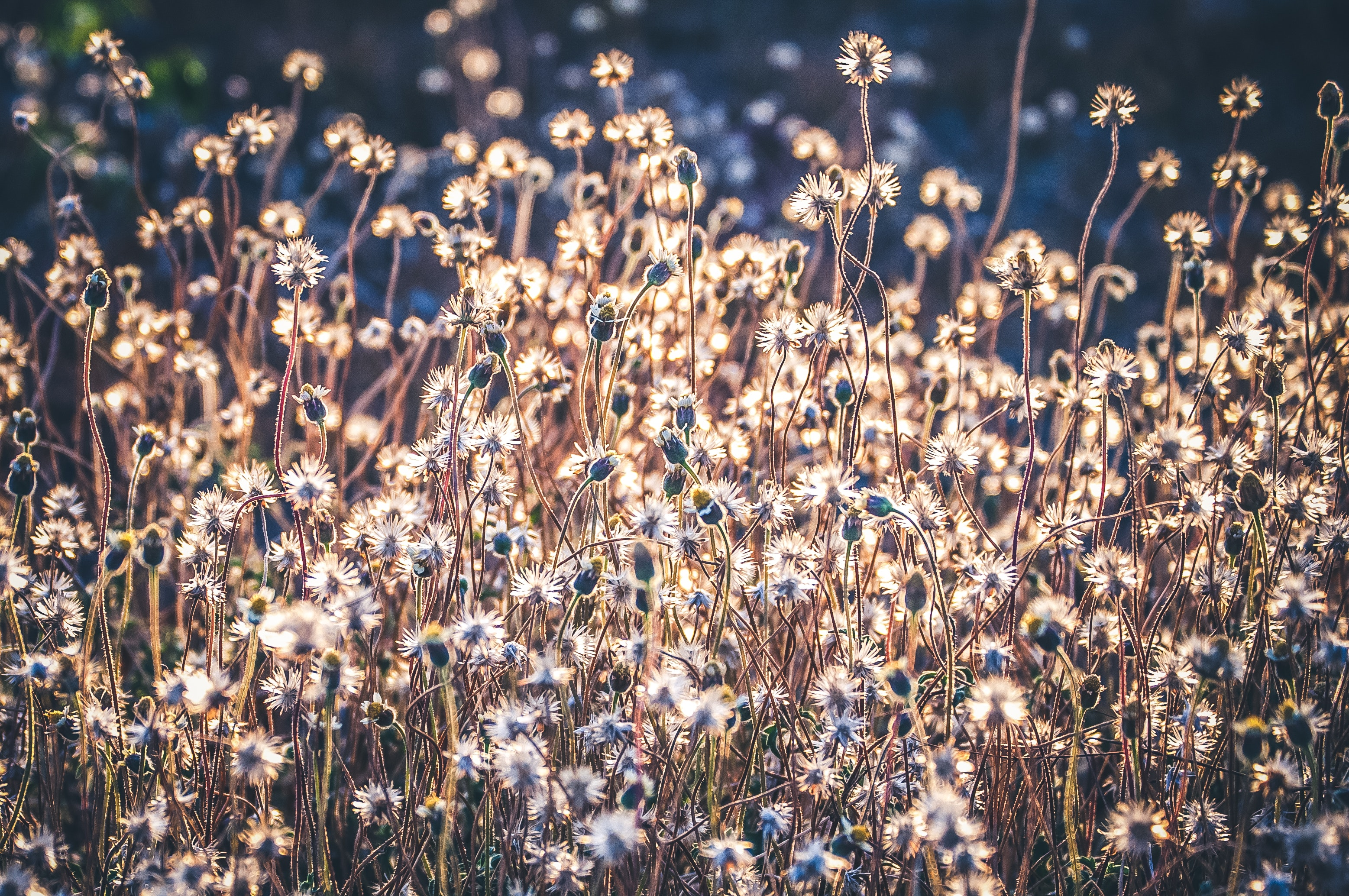 Flowerbed photo