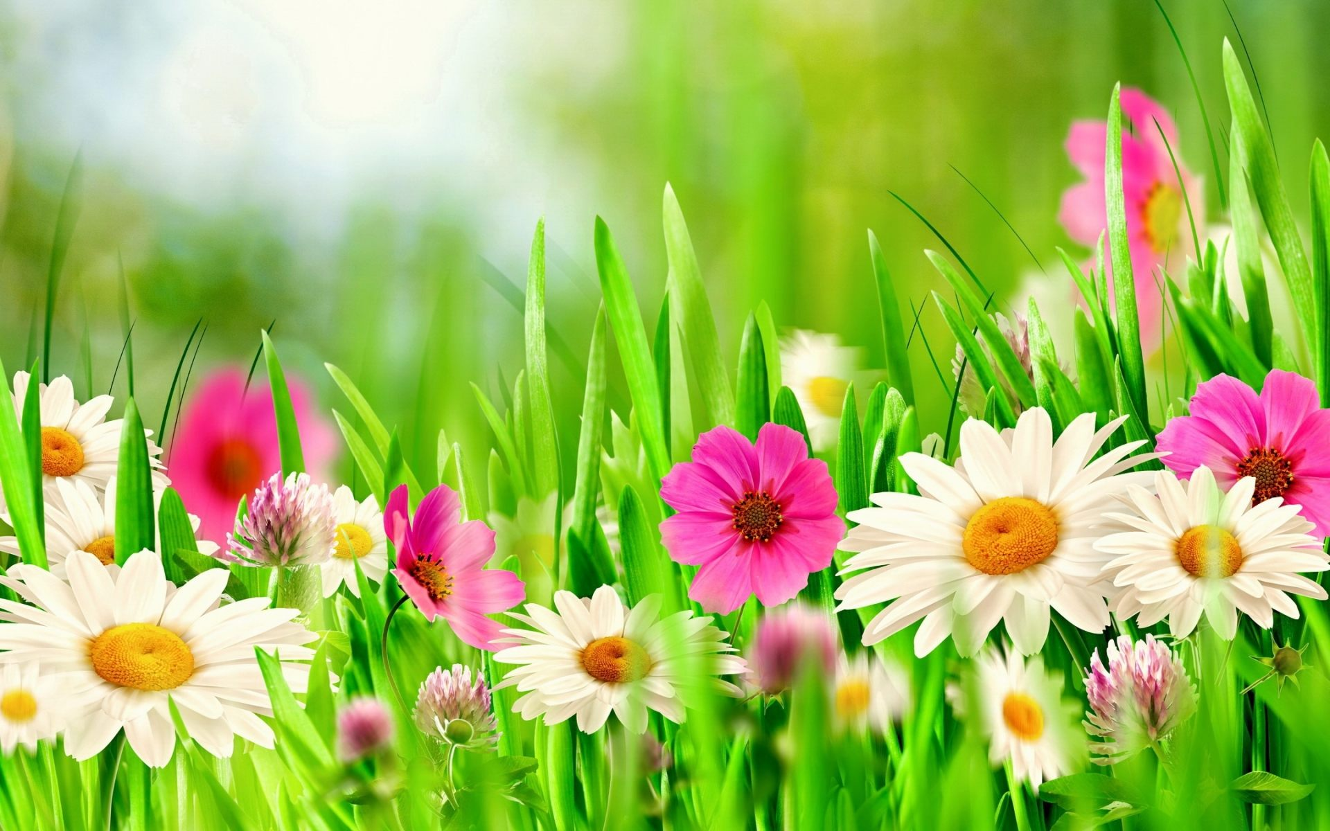 Free Photo Spring Flowers May Growing Gardening Free Download