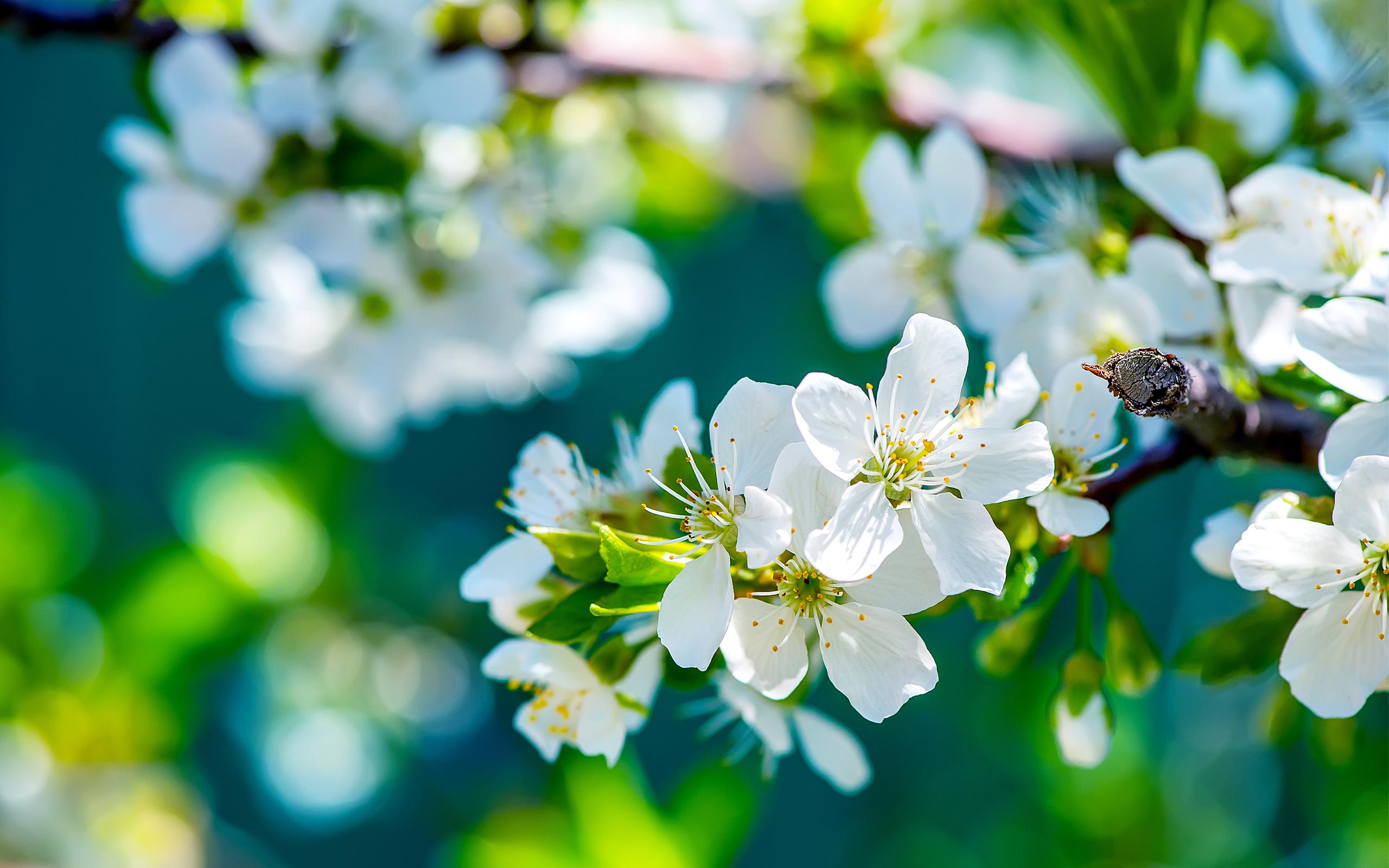 2560x1600px Flowers 2637.43 KB #235354