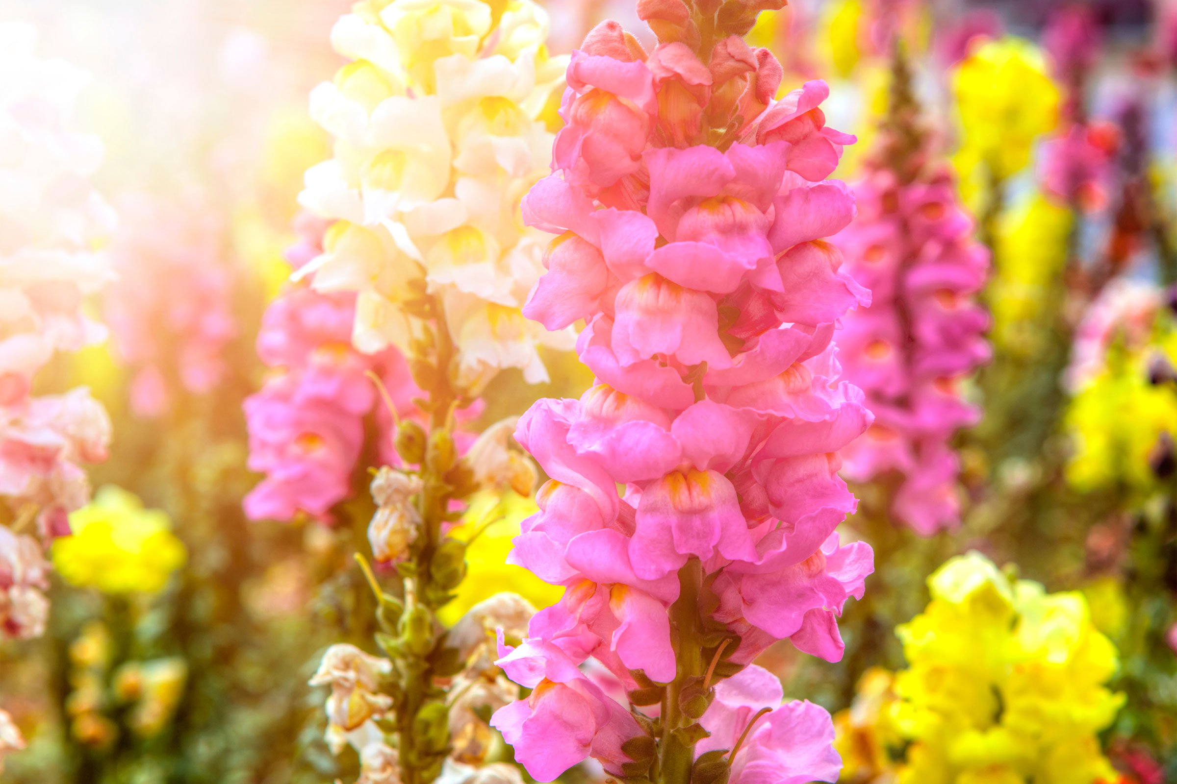 Annual Flowers: How to Make Them Thrive | Reader's Digest