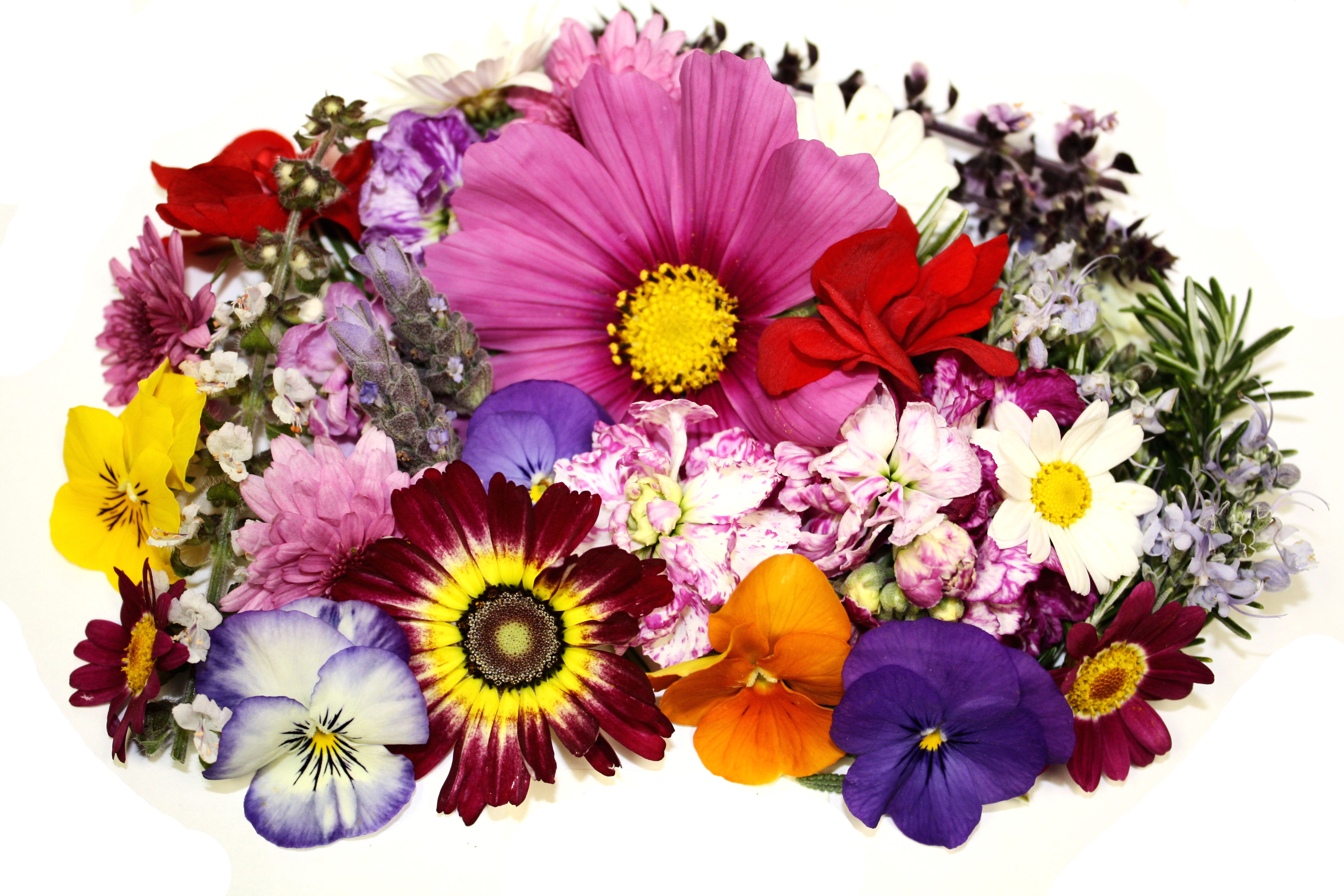 Celebrating Motherhood: Fresh Origins' Edible Spring Flowers!