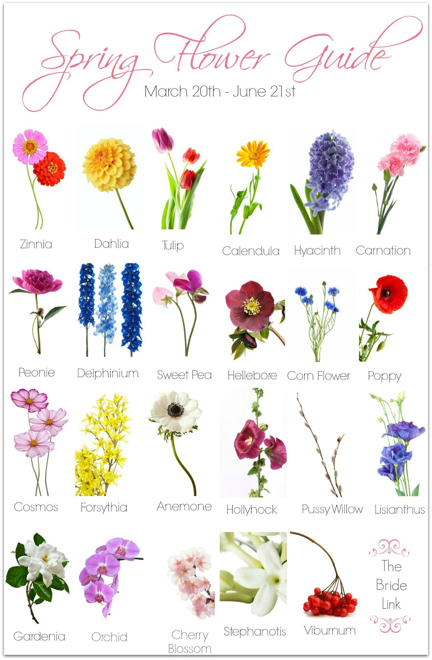 Spring Wedding Flower Guide | Spring wedding flowers, Spring ...