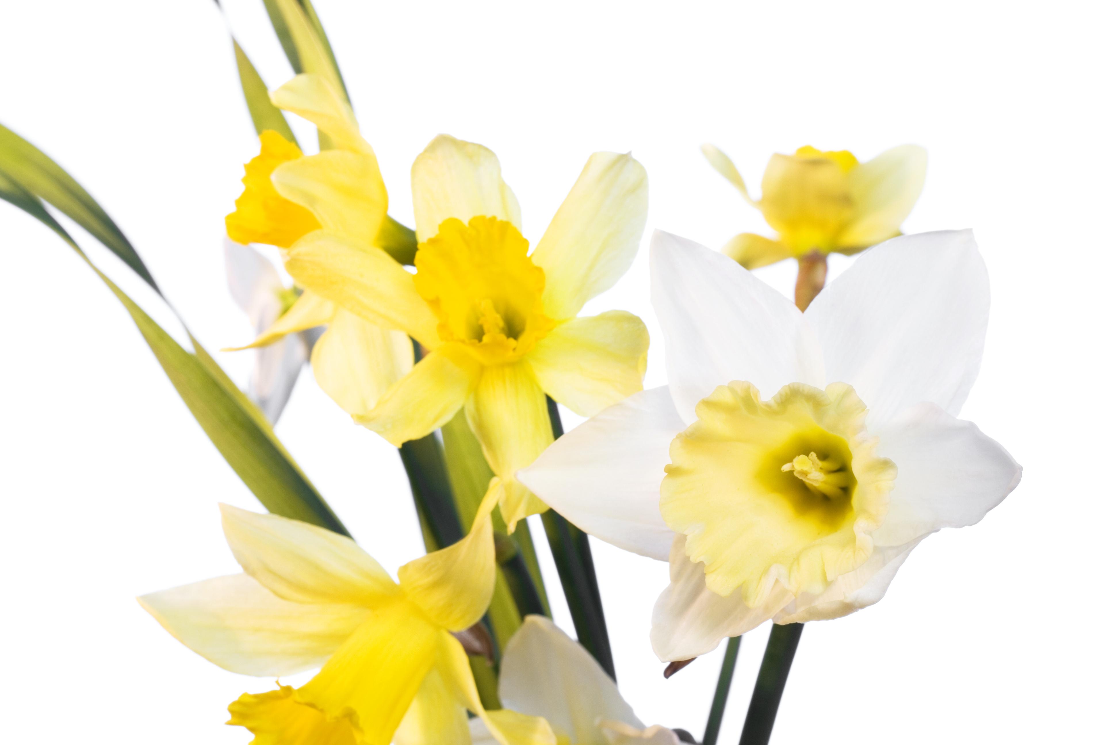 Flowers, Closeup, Detail, Flora, Floral, HQ Photo