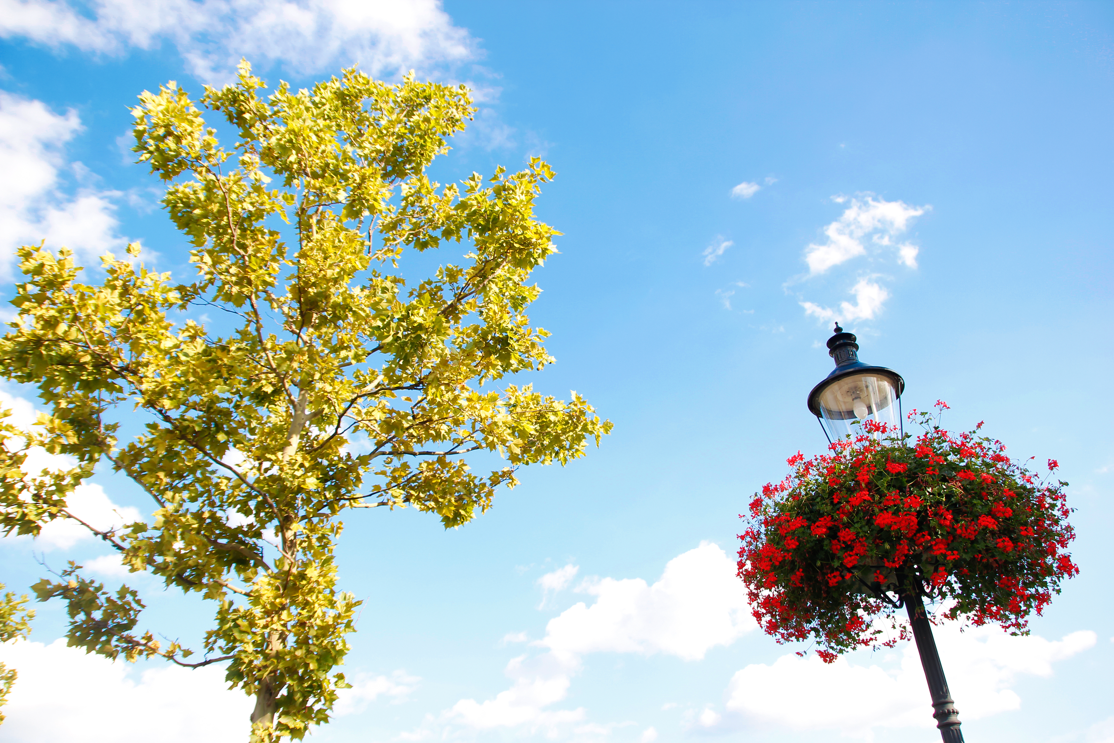 flowers and leaves, Bloom, Nature, Tree, Summer, HQ Photo