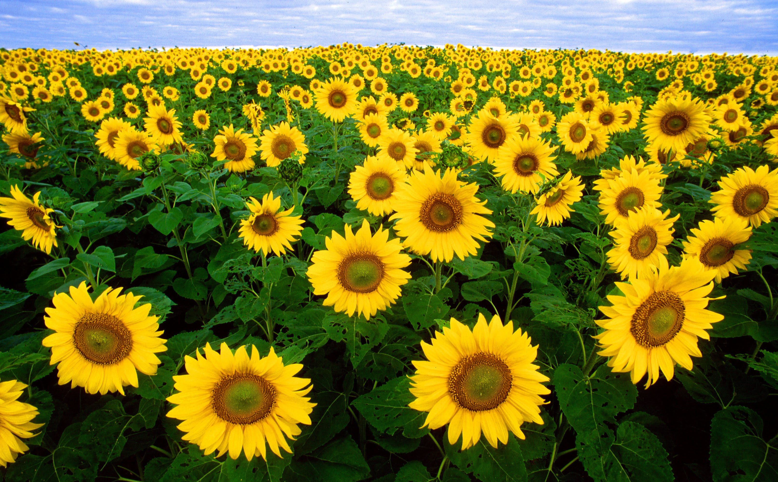 Flowers Field - YouTube