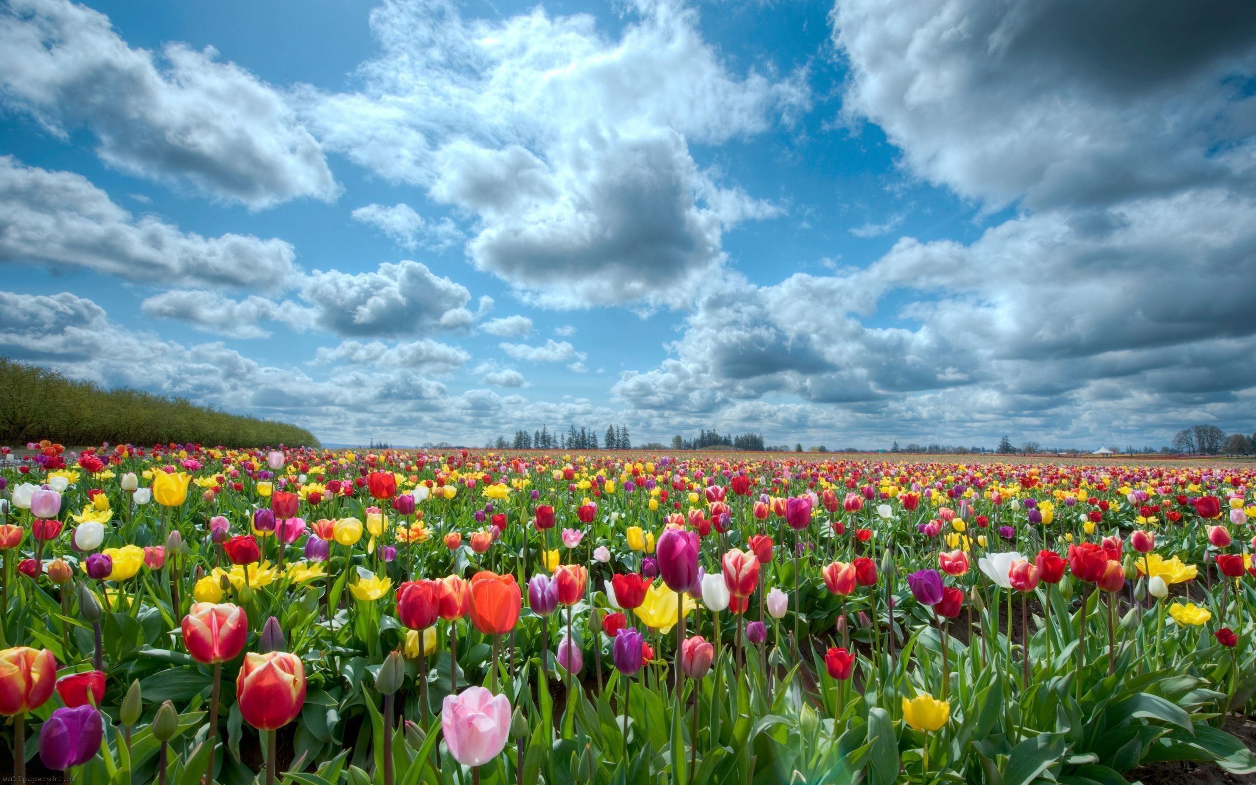 Beauty Flower Nature Spring Flowers Field 1807083 Best Pictures ...